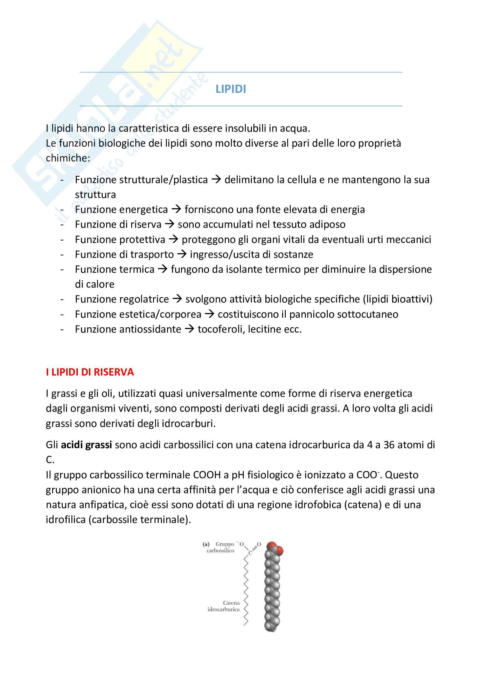 Lipidi - Schemi riassuntivi di Biochimica