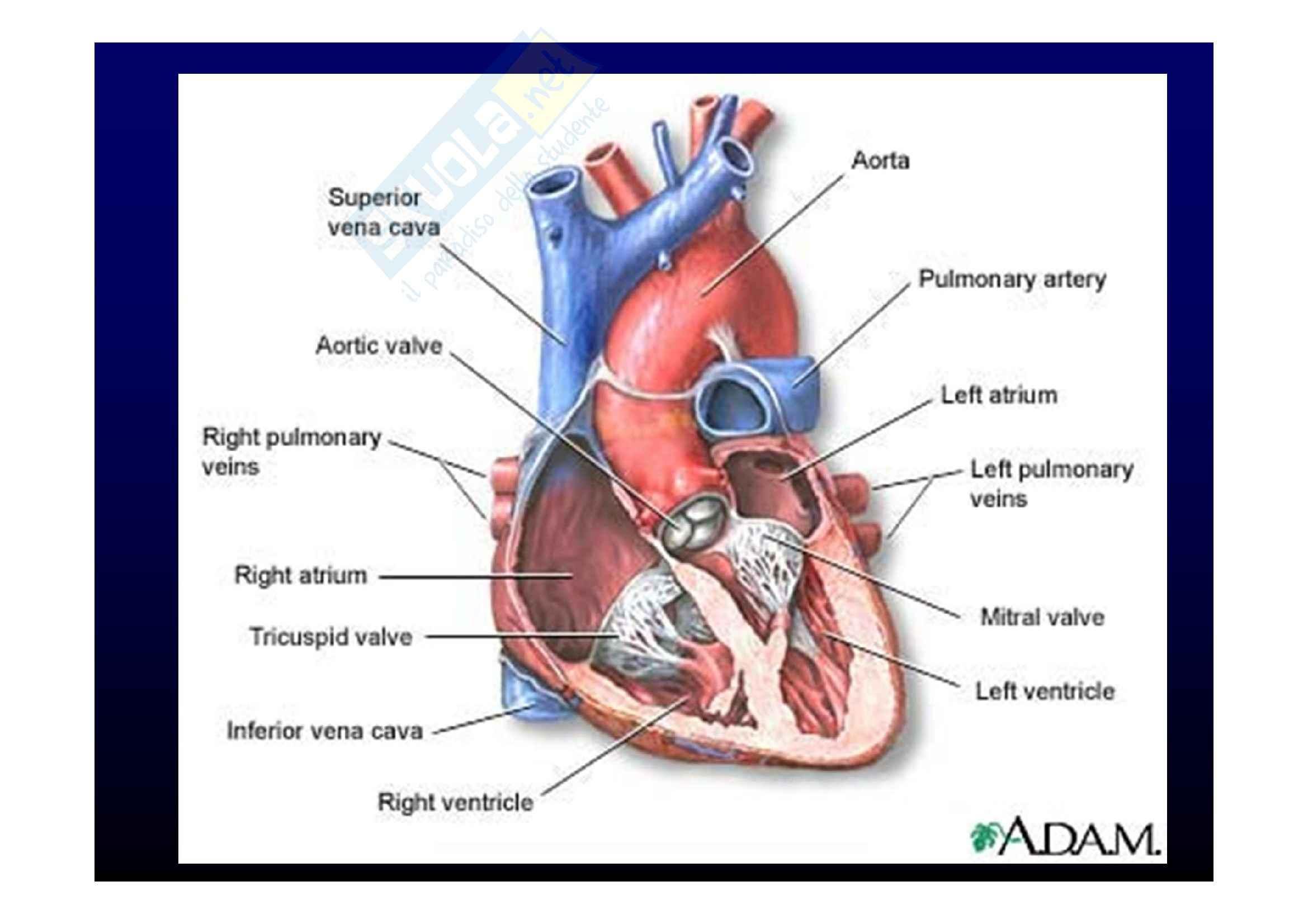 Medicina Interna del cuore