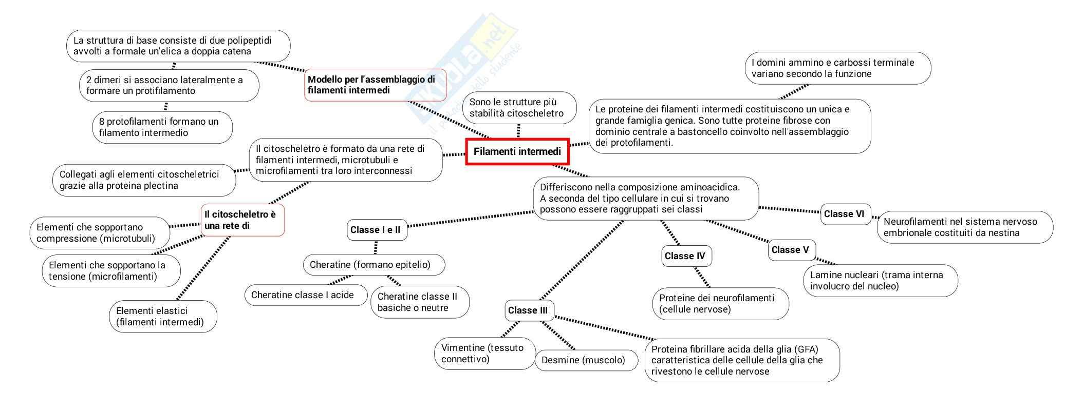 Schema su Citoscheletro pdf