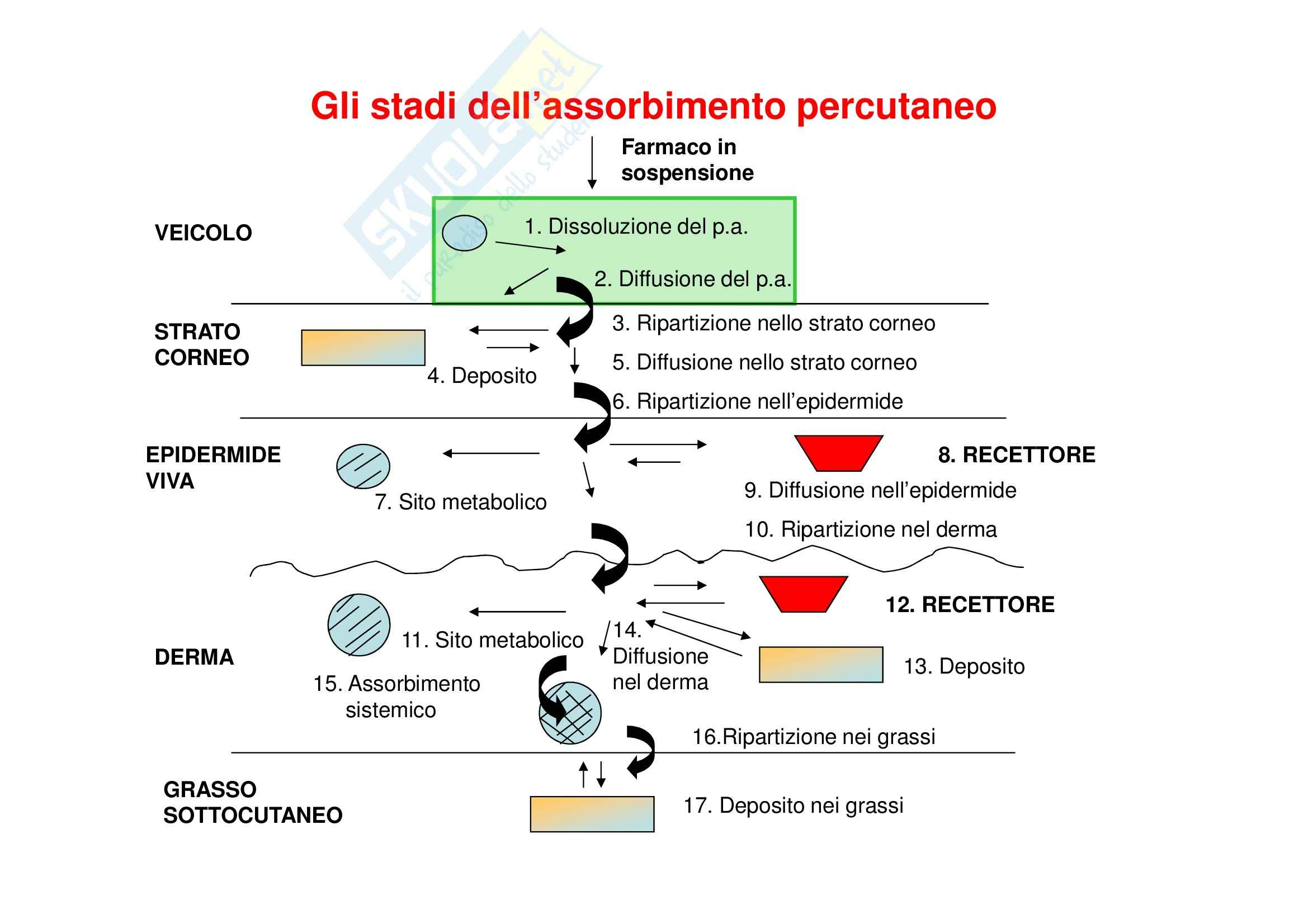 Tecnica farmaceutica - assorbimento percutaneo Pag. 6
