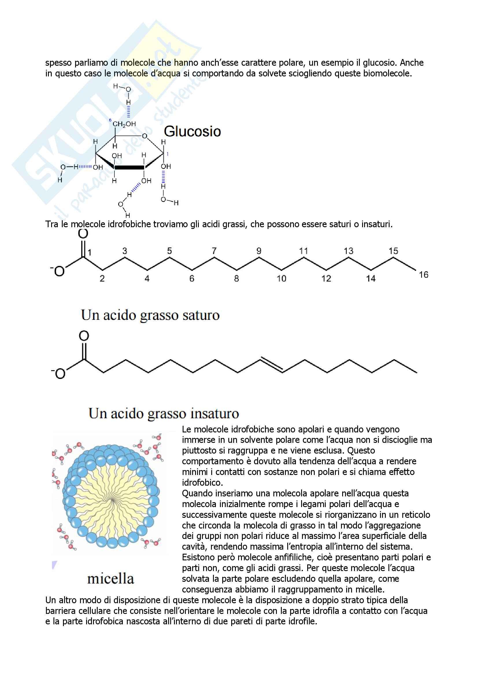 Biochimica Pag. 6