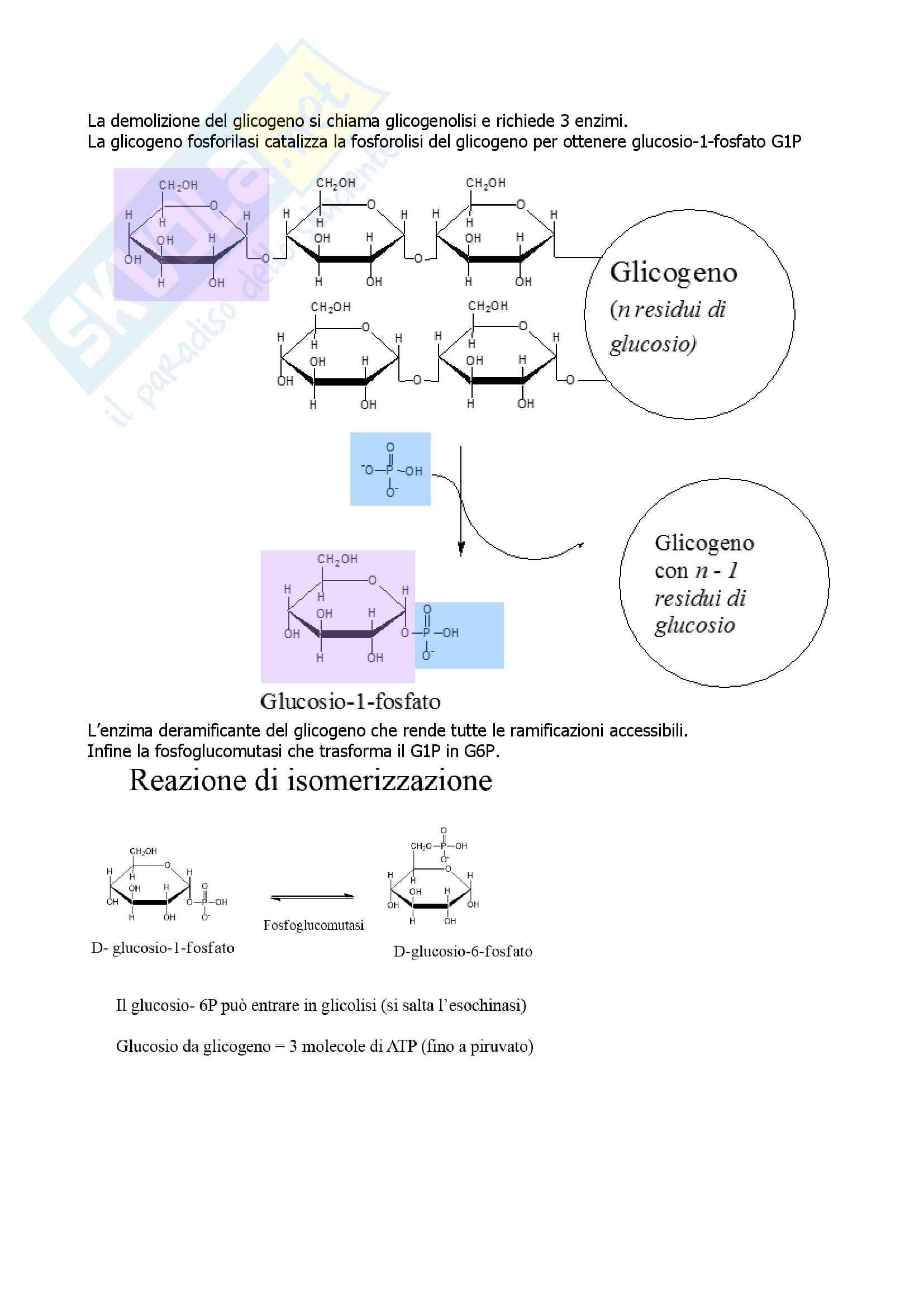 Biochimica Pag. 66