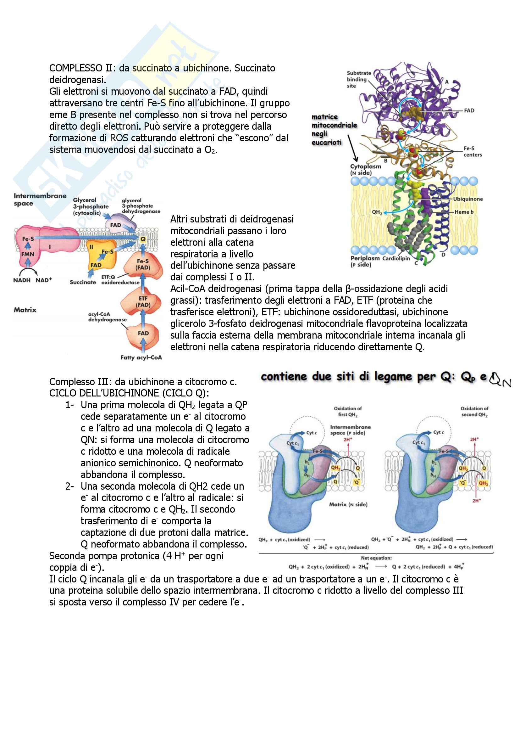 Biochimica Pag. 81