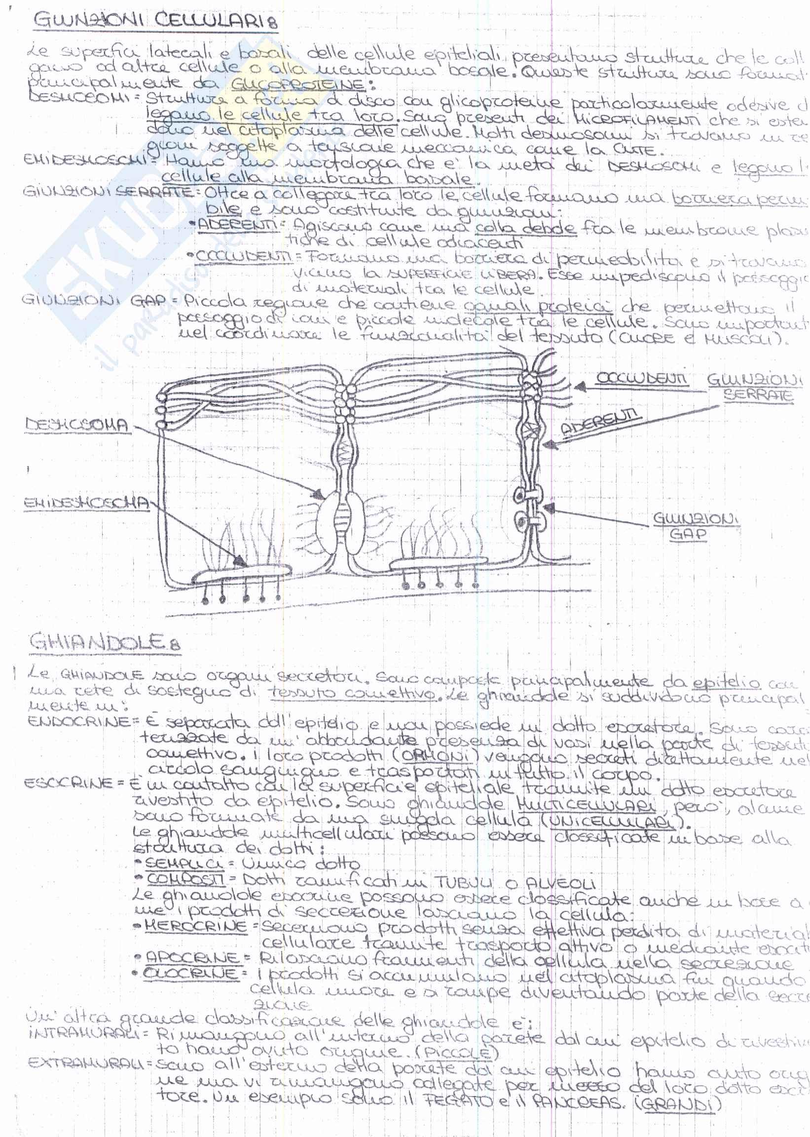 Riassunto esame Anatomia, prof. Ripani, libro consigliato Anatomia Clinica, Marinozzi, Gaudio, Ripani Pag. 11