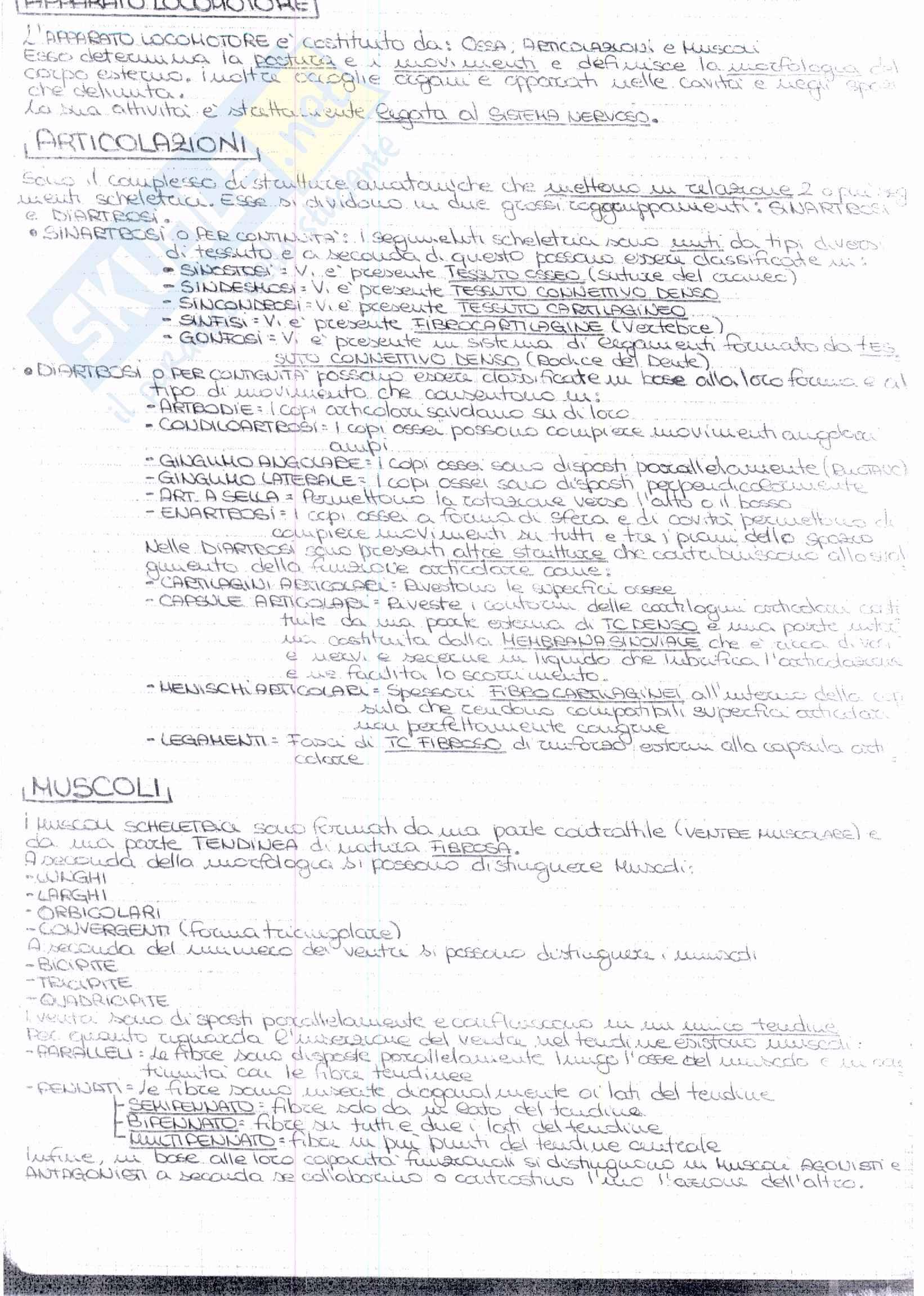 Riassunto esame Anatomia, prof. Ripani, libro consigliato Anatomia Clinica, Marinozzi, Gaudio, Ripani Pag. 21