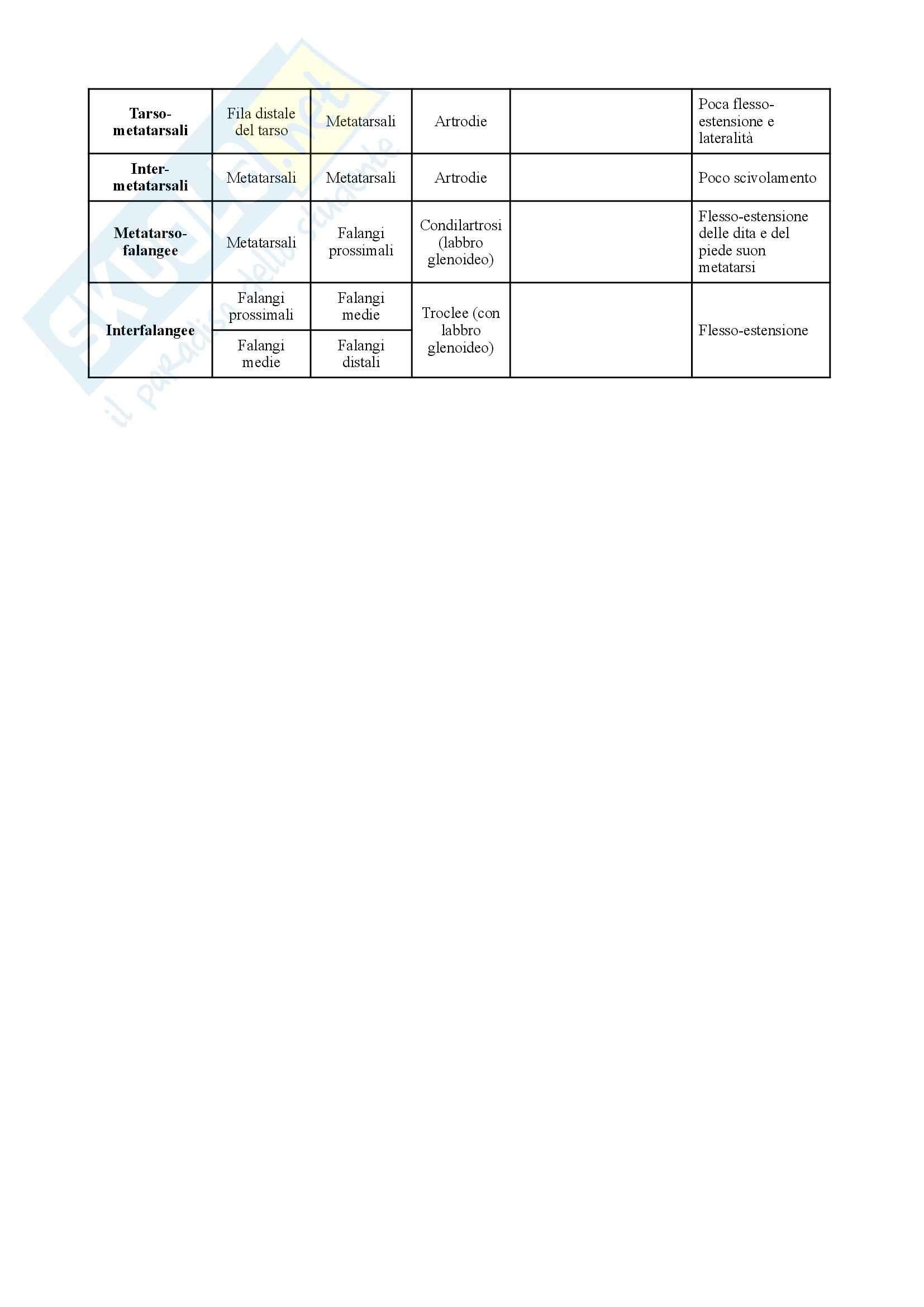 Anatomia umana - schema sulle articolazioni Pag. 6