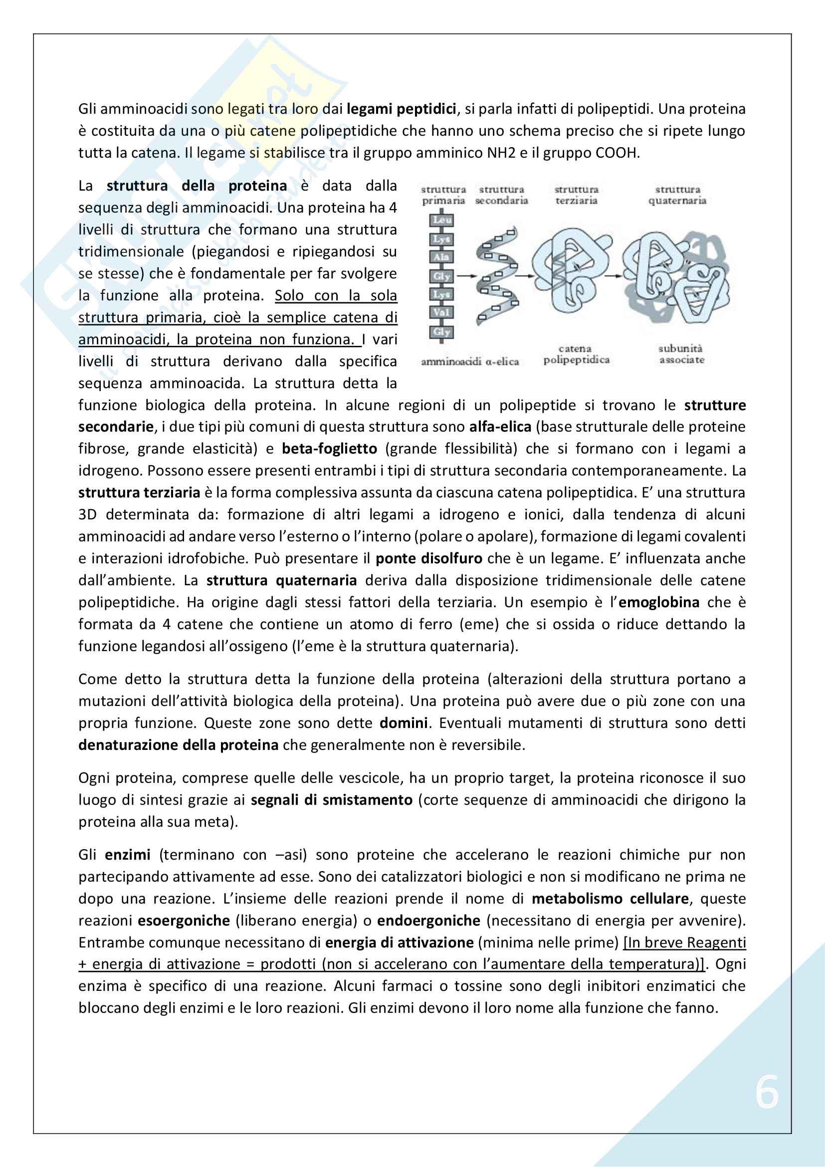 Biologia Applicata - 1° Anno Scienze Motorie Pag. 6