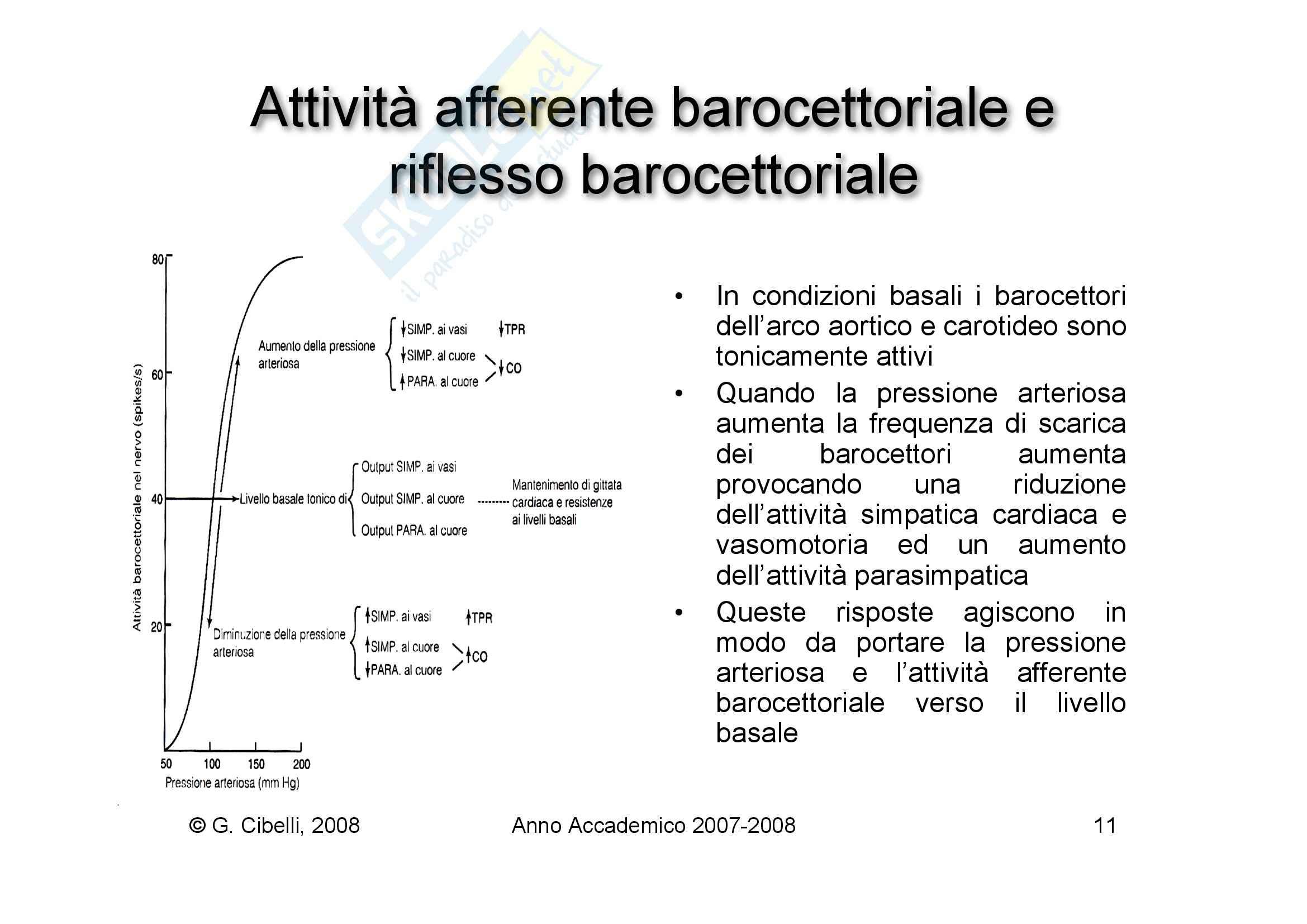 Fisiologia umana I - regolazione nervosa del cuore Pag. 11
