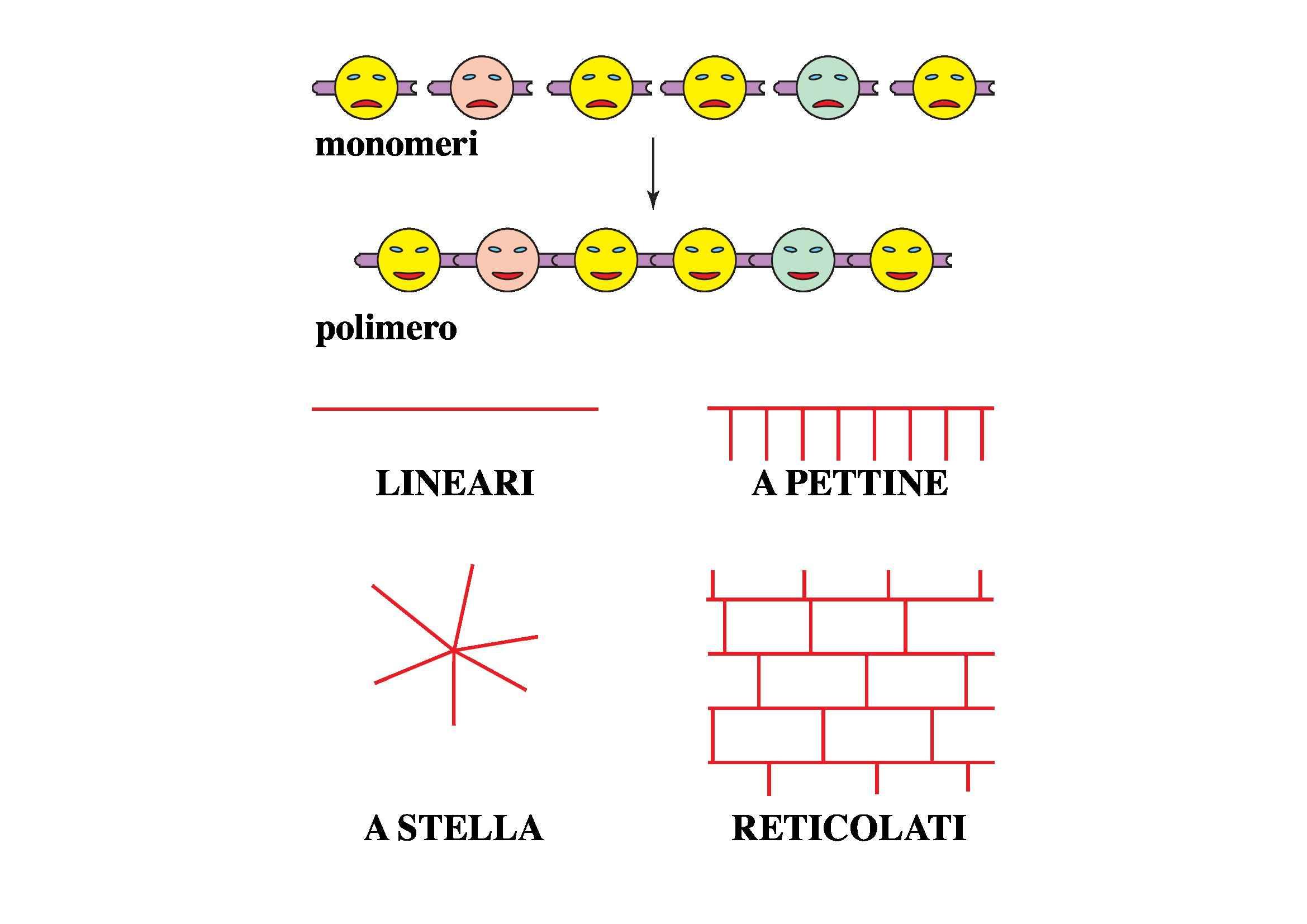 Macromolecole e polimeri naturali