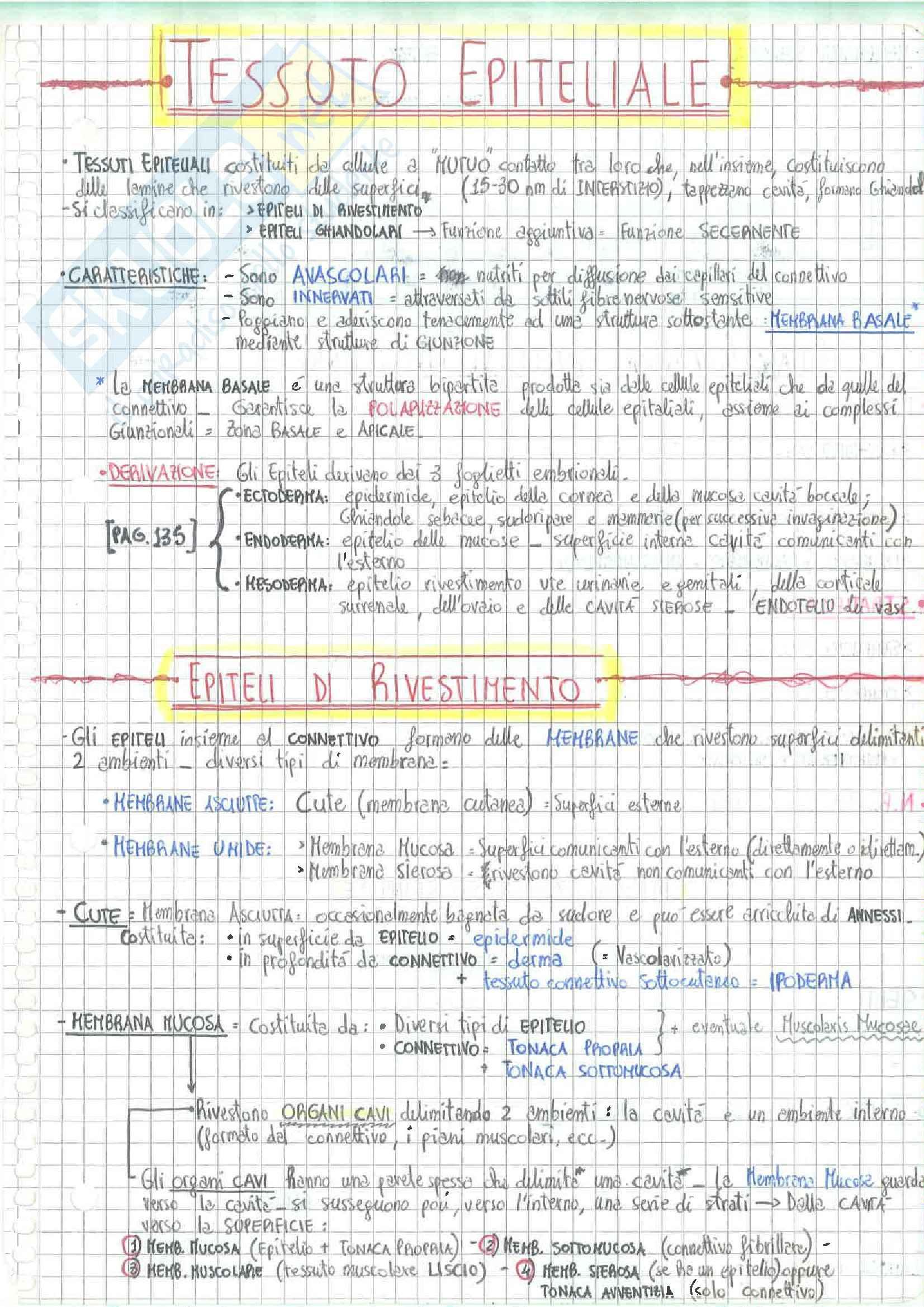 Lezioni, Istologia