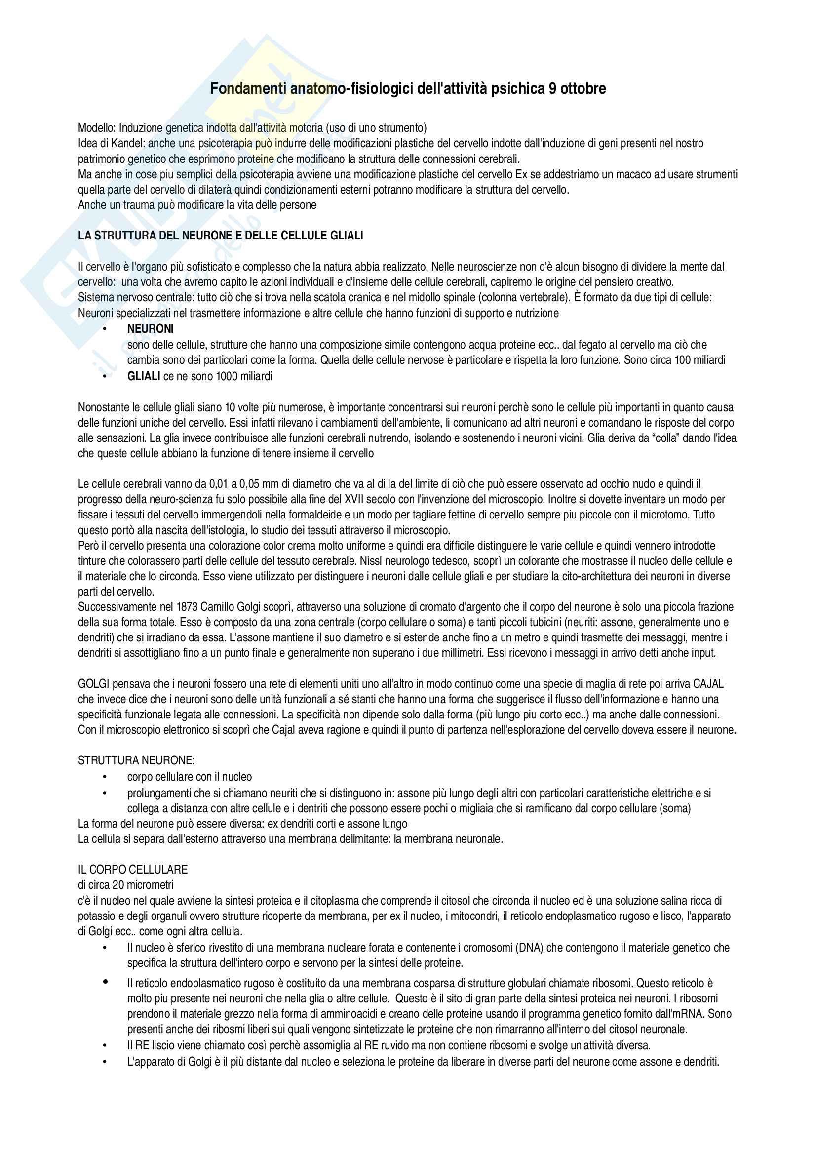 Neuroscienze - Fondamenti anatomo-fisiologici dell'attività psichica- Esame completo