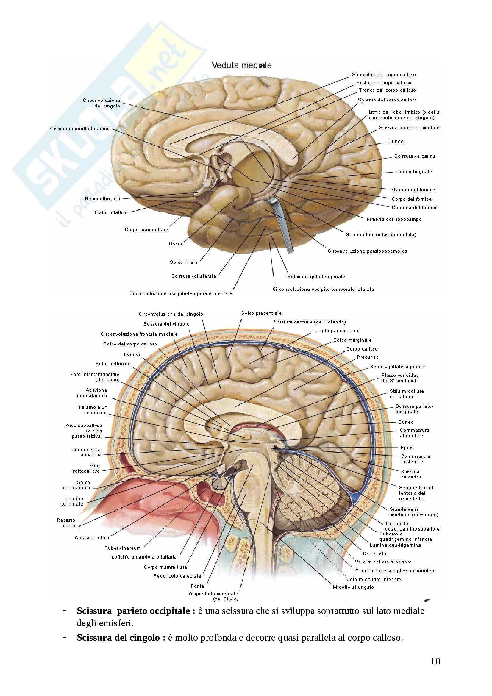Riassunto esame Neuroanatomia, prof. Di Baldassarre Pag. 106