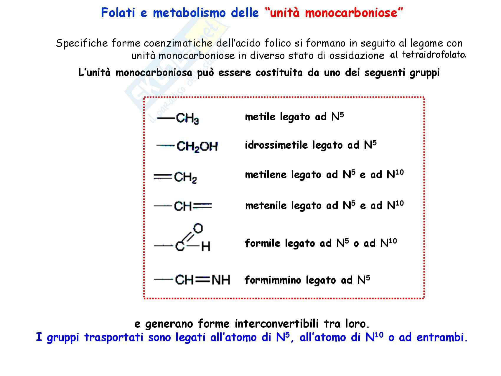 28 Vitamine idrosolubili, struttura e funzioni Pag. 31