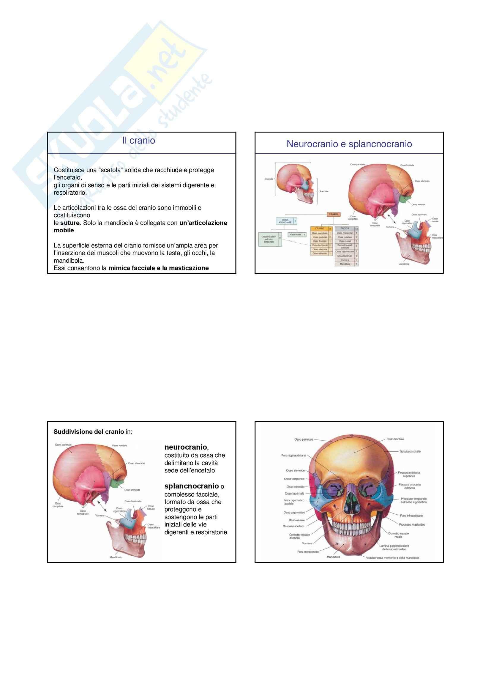 Anatomia I – Cranio e colonna – Slides 3
