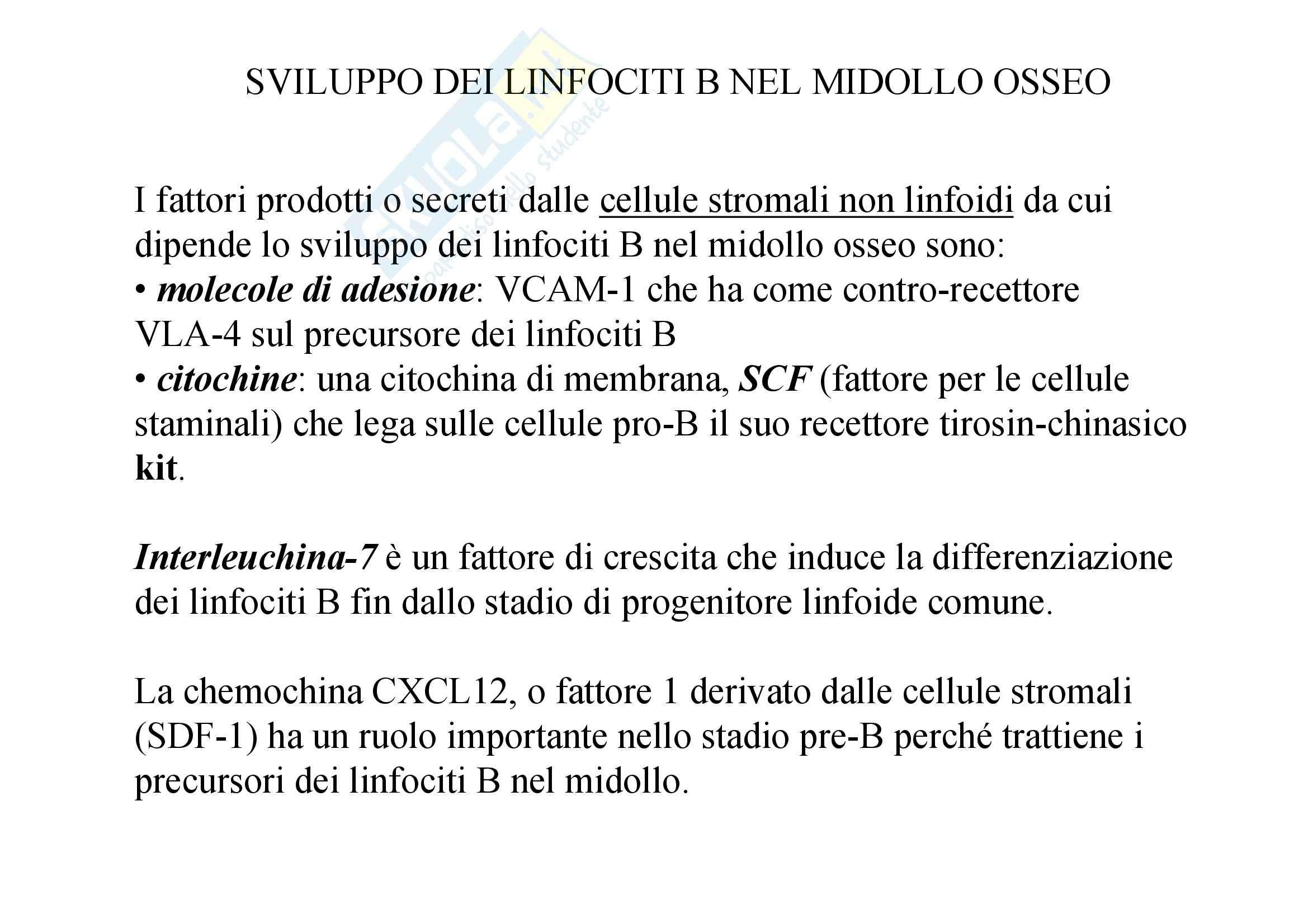 Immunologia - sviluppo e sopravvivenza dei linfociti Pag. 11