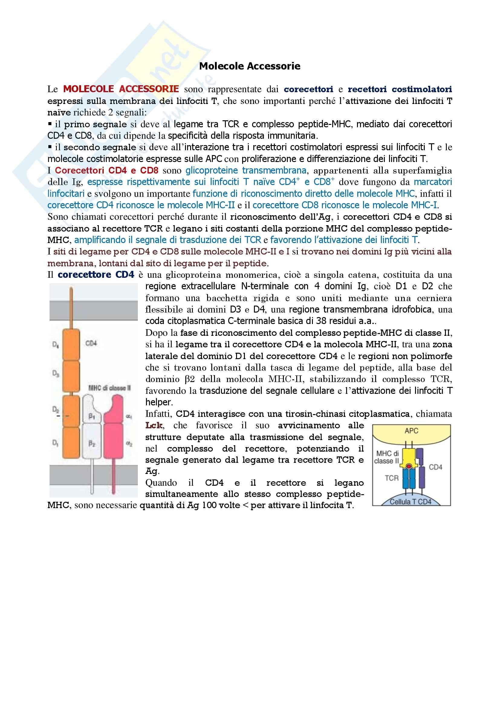 Immunologia - molecole accessorie