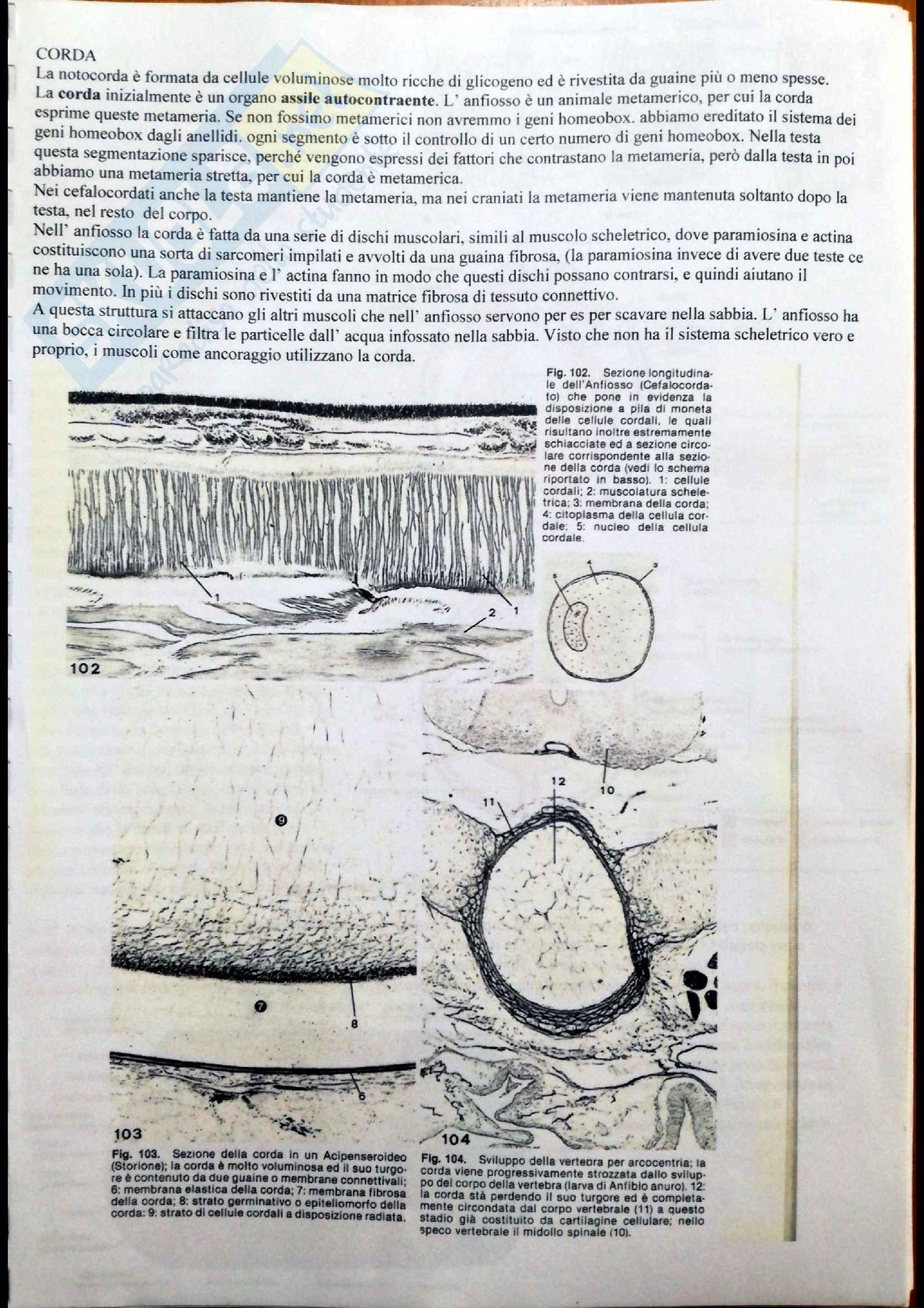 Sistema scheletrico, Anatomia comparata