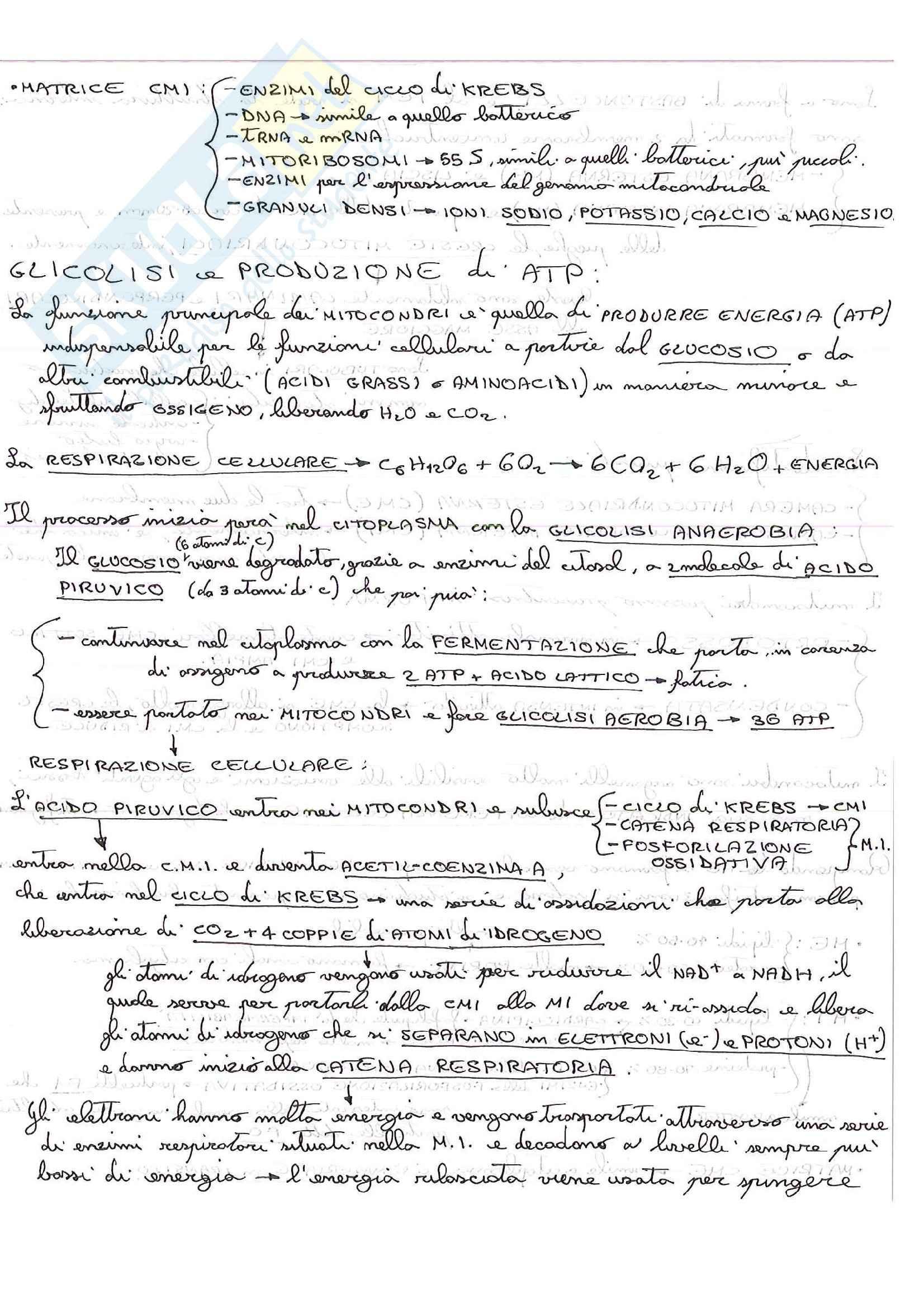 Lezioni, Citologia Pag. 16