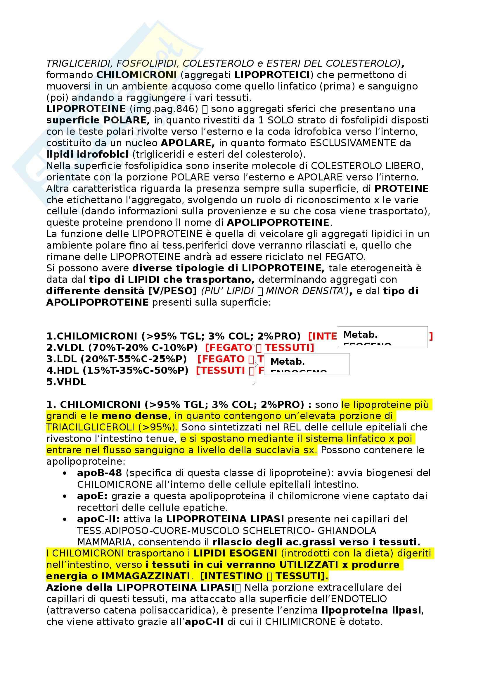 Riassunto esame Alimentazione e nutrizione umana, prof. Piccoli, libro consigliato Principi di Nutrizione Pag. 16