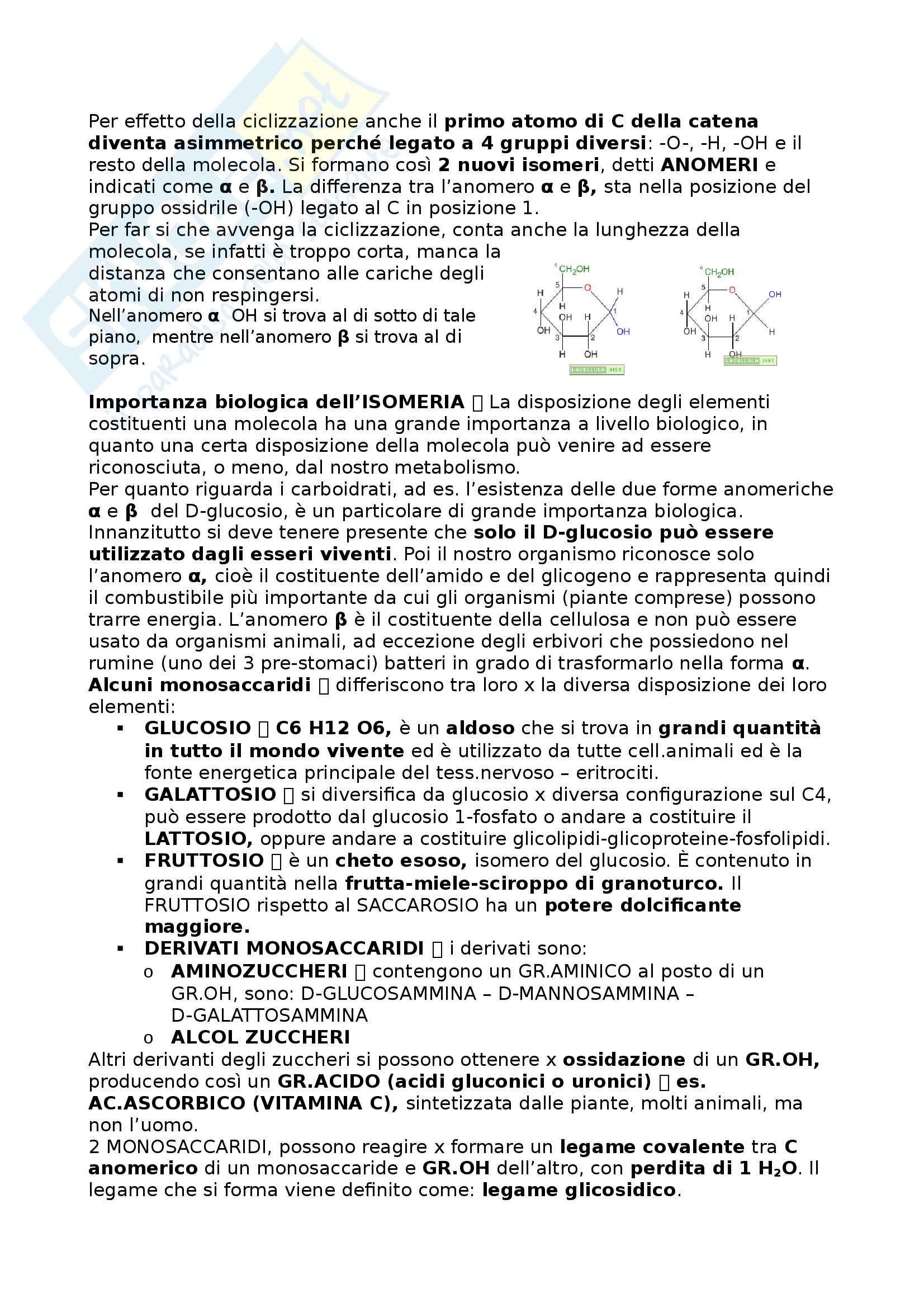 Riassunto esame Alimentazione e nutrizione umana, prof. Piccoli, libro consigliato Principi di Nutrizione Pag. 2