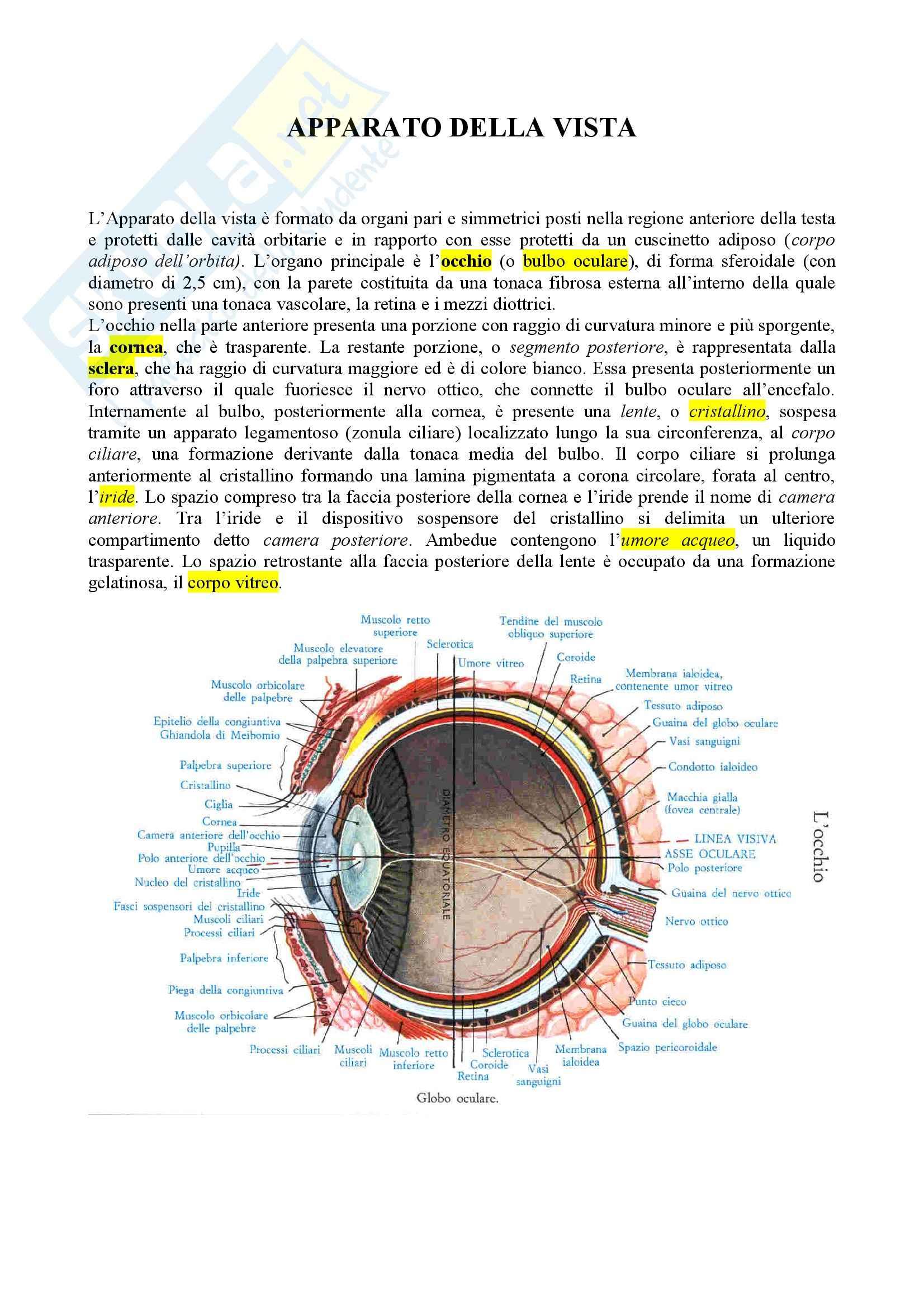 Anatomia umana - apparato della vista