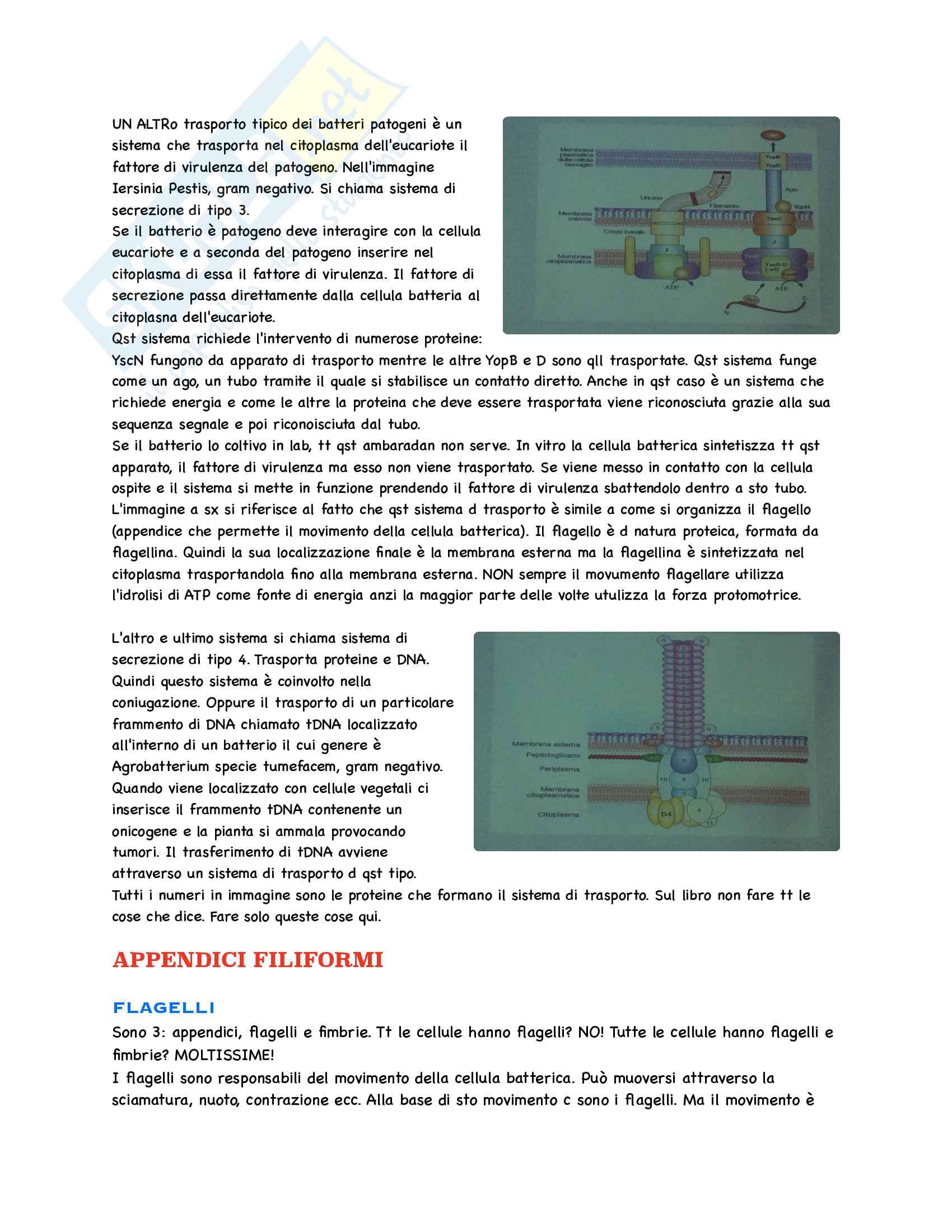 Microbiologia Appunti Parte 1 Pag. 16