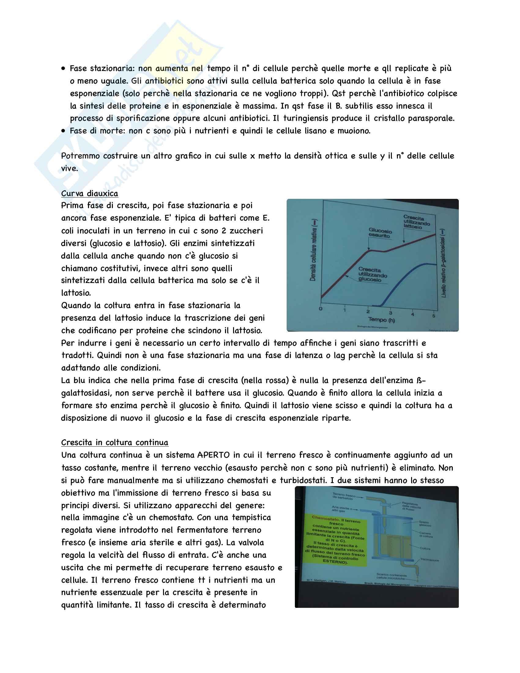 Microbiologia Appunti Parte 1 Pag. 41