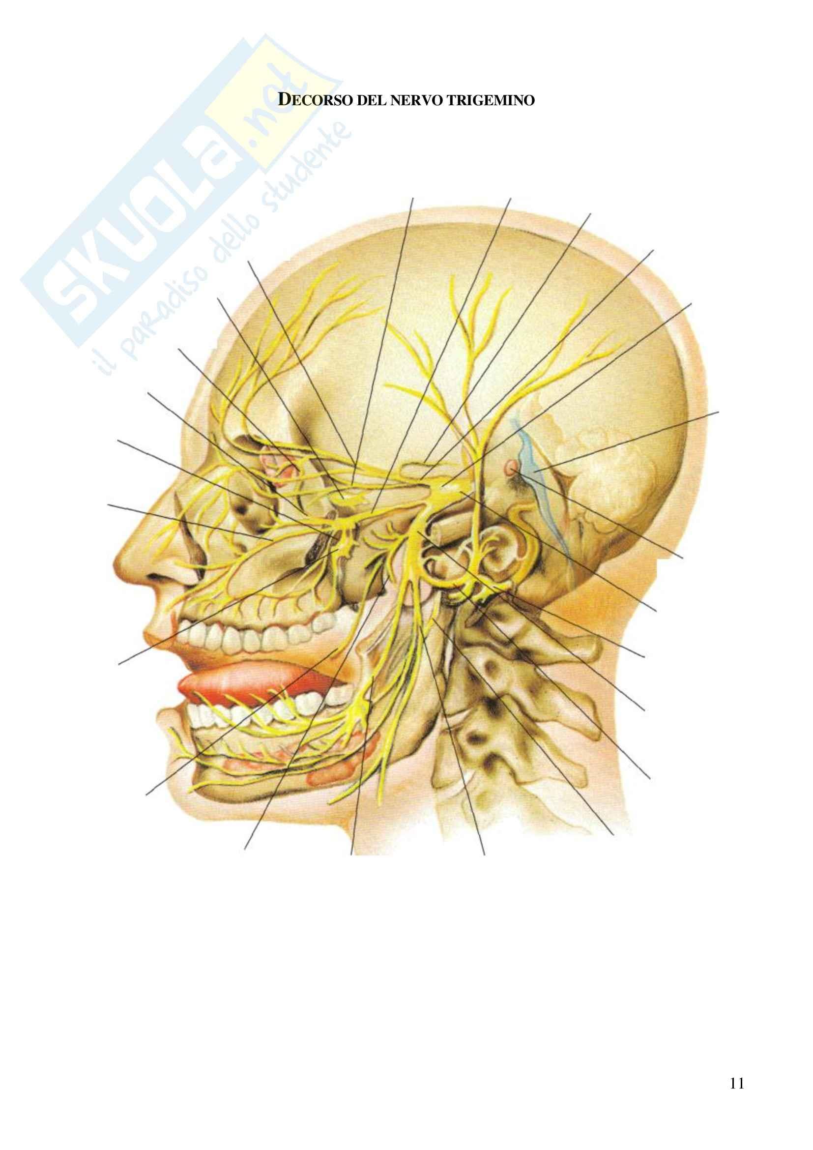 Nervi del cranio, Anatomia dell'Apparato stomatognatico Pag. 11