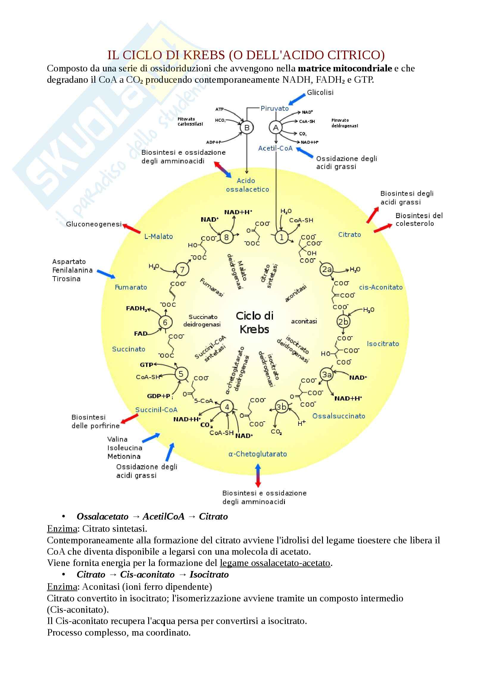 Ciclo di Krebs, Basi biologiche