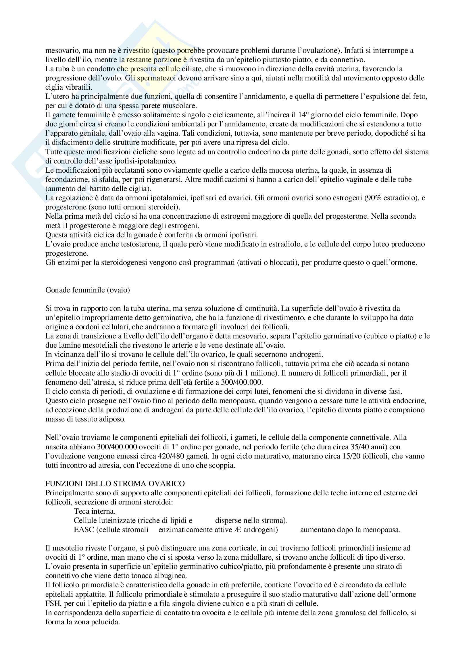 Anatomia - Nozioni generali Pag. 31