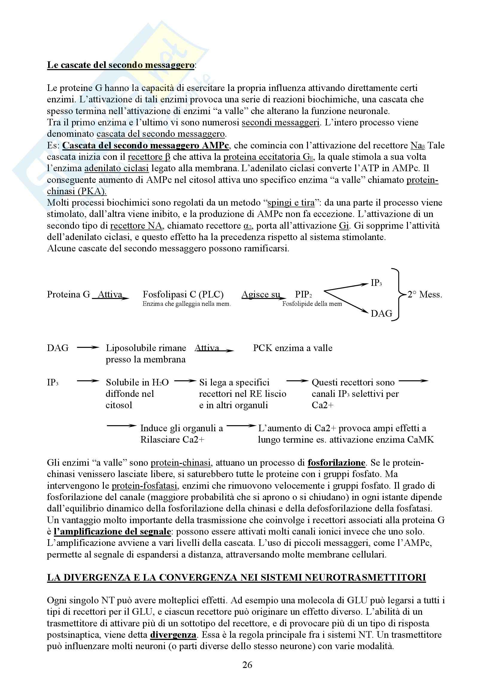 Neuropsicologia - fondamenti anatomo fisiologici dell'attività mentale Pag. 26