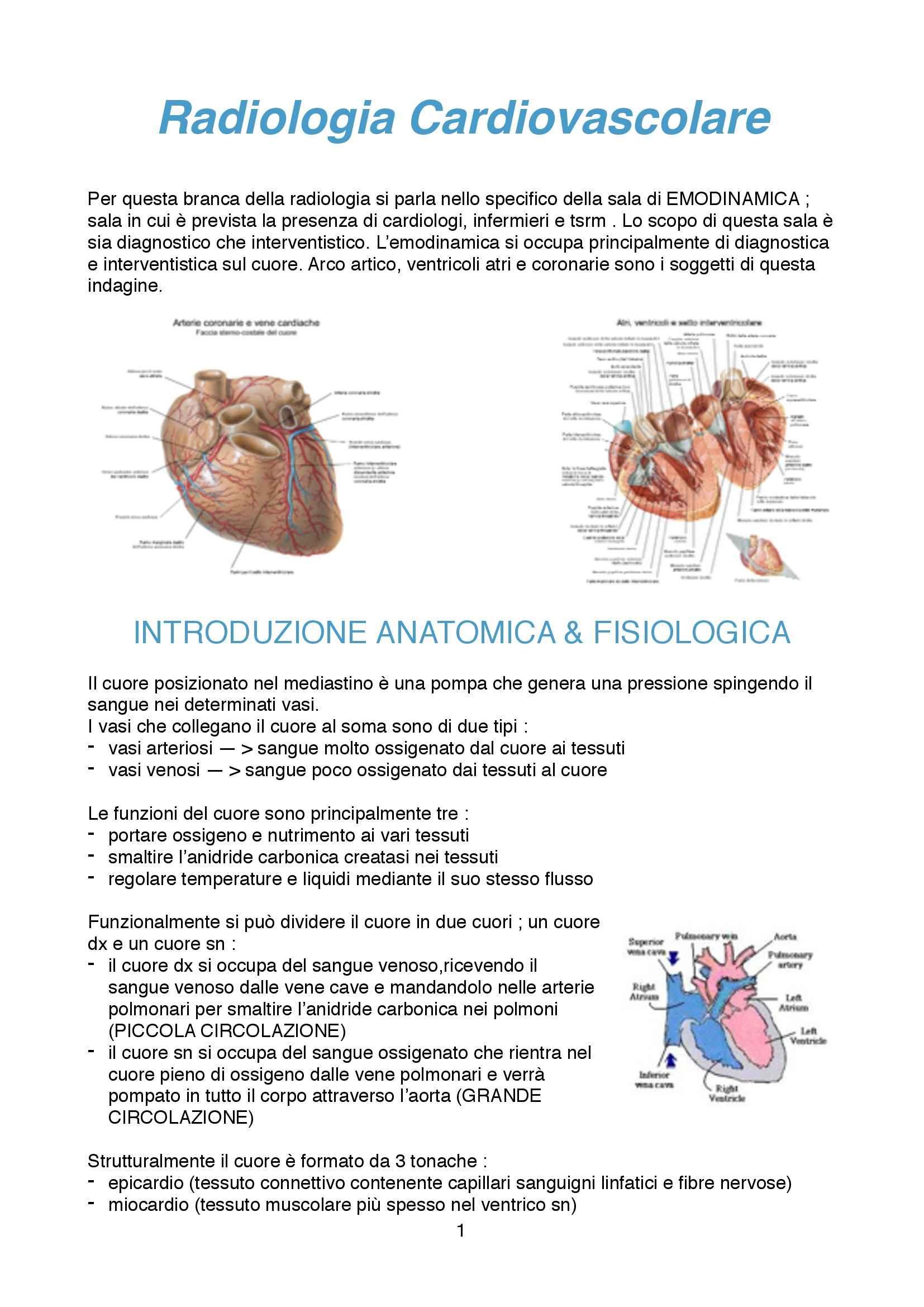 Diagnostica vascolare - anatomia cardiologica