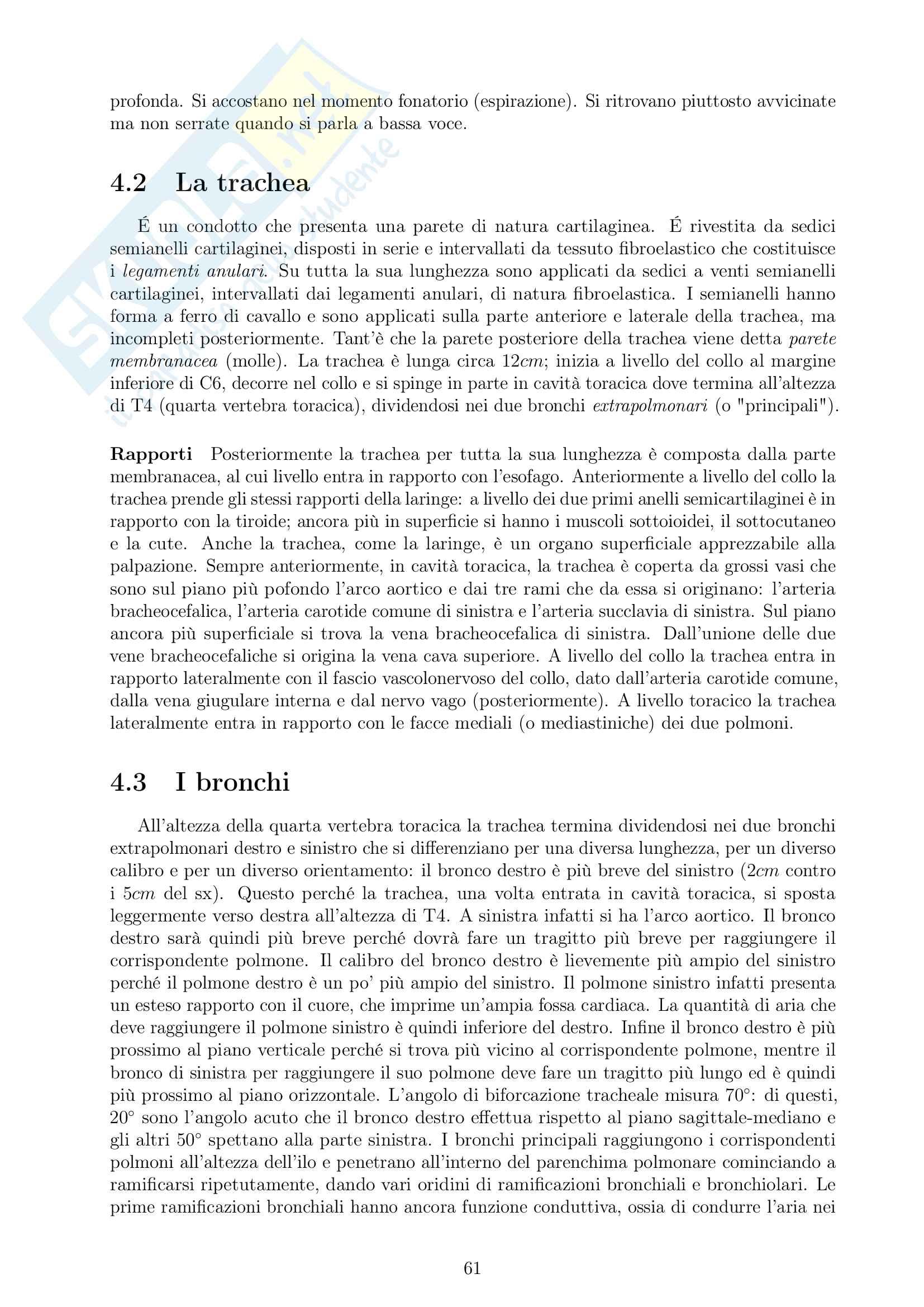 Appunti Anatomia Umana Pag. 61