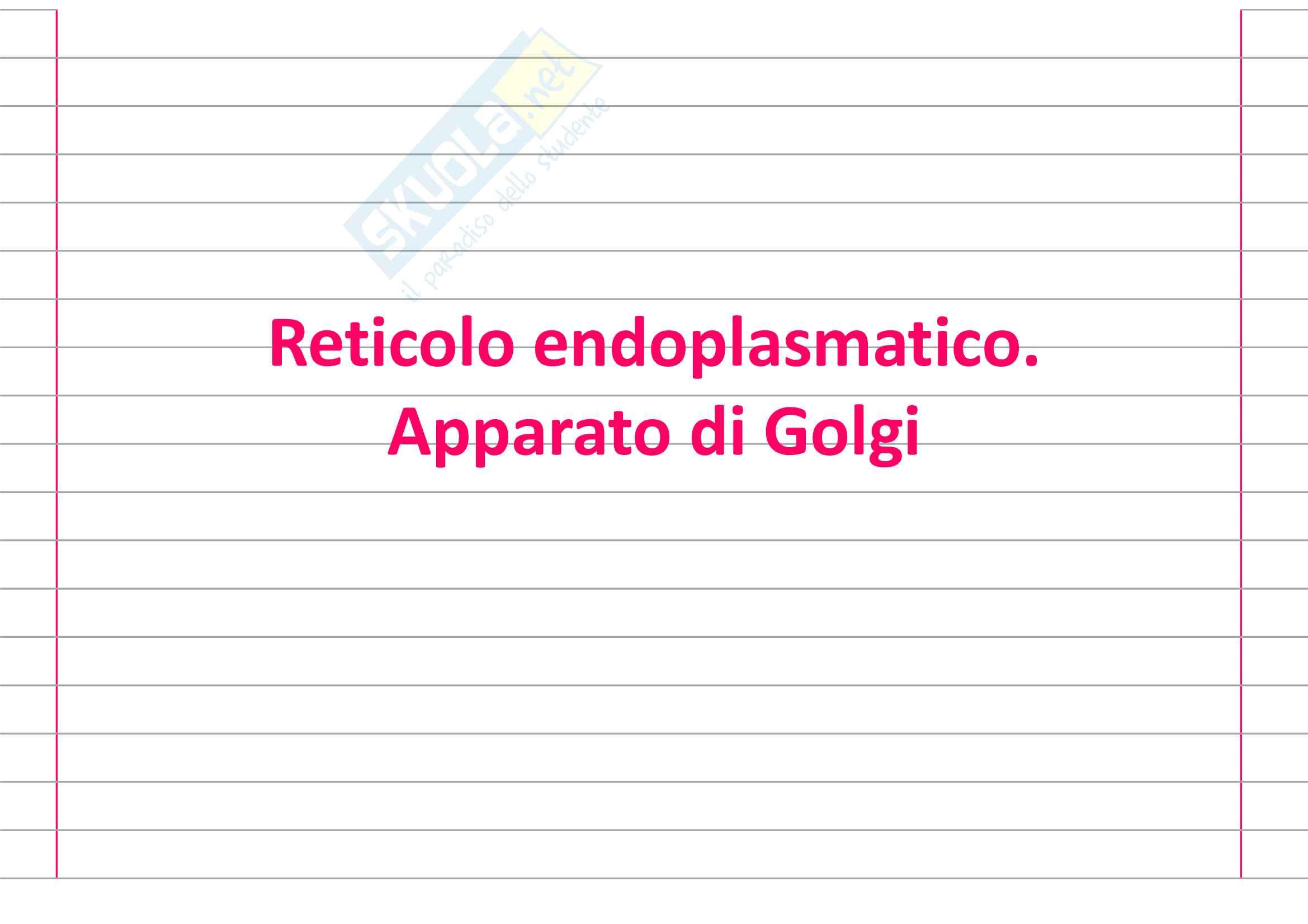 Reticolo endoplasmatico, Apparato di Golgi