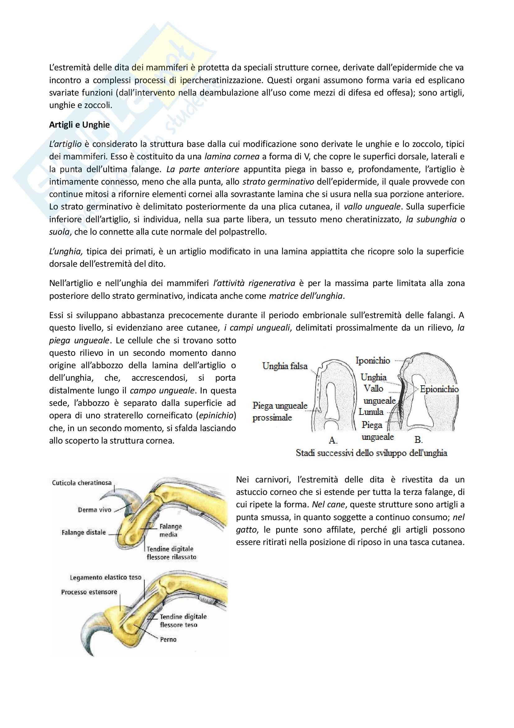 Zoccolo, Corna e Unghie, Anatomia con elementi di istologia