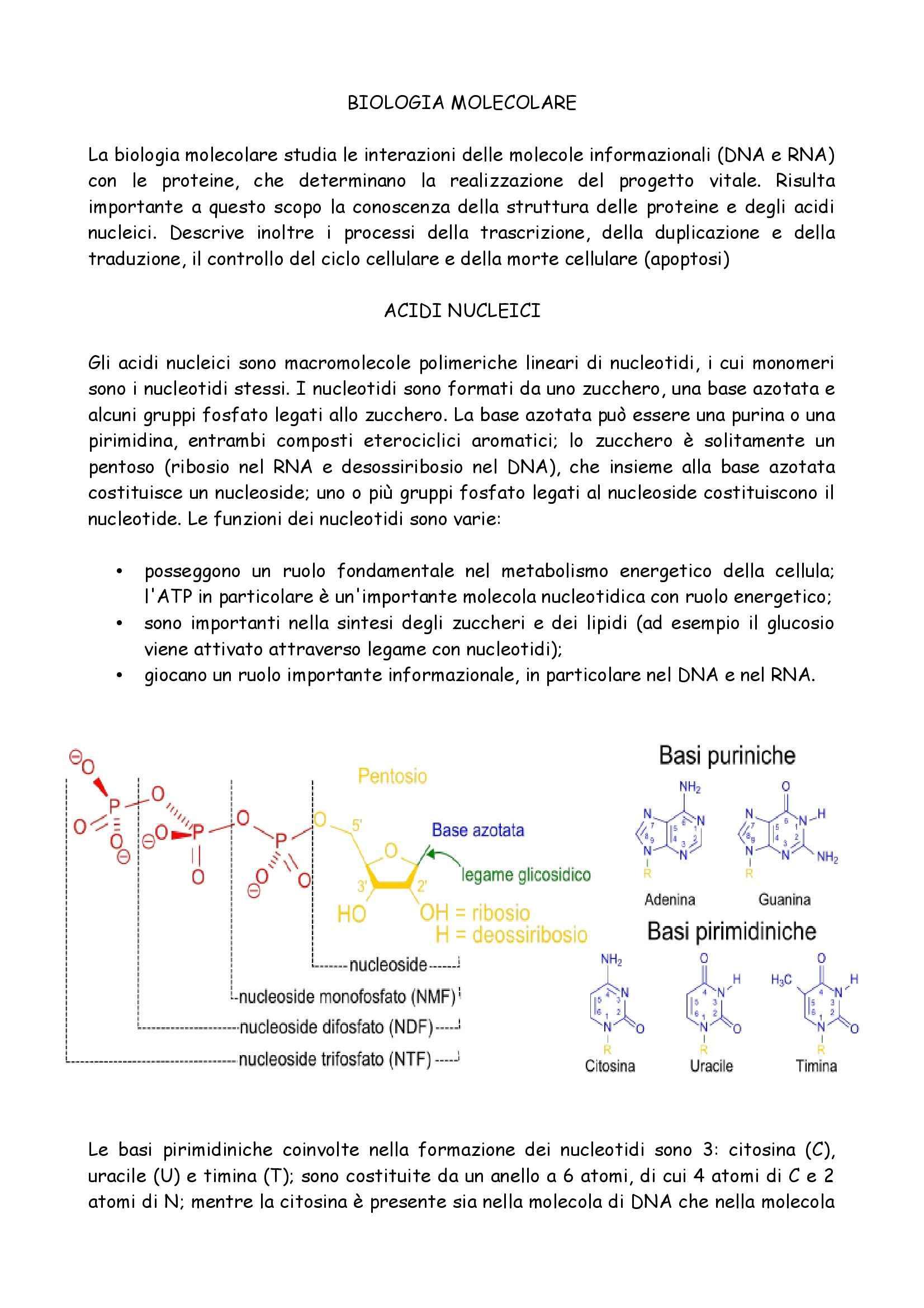 appunto A. Pintaudi Biologia Molecolare