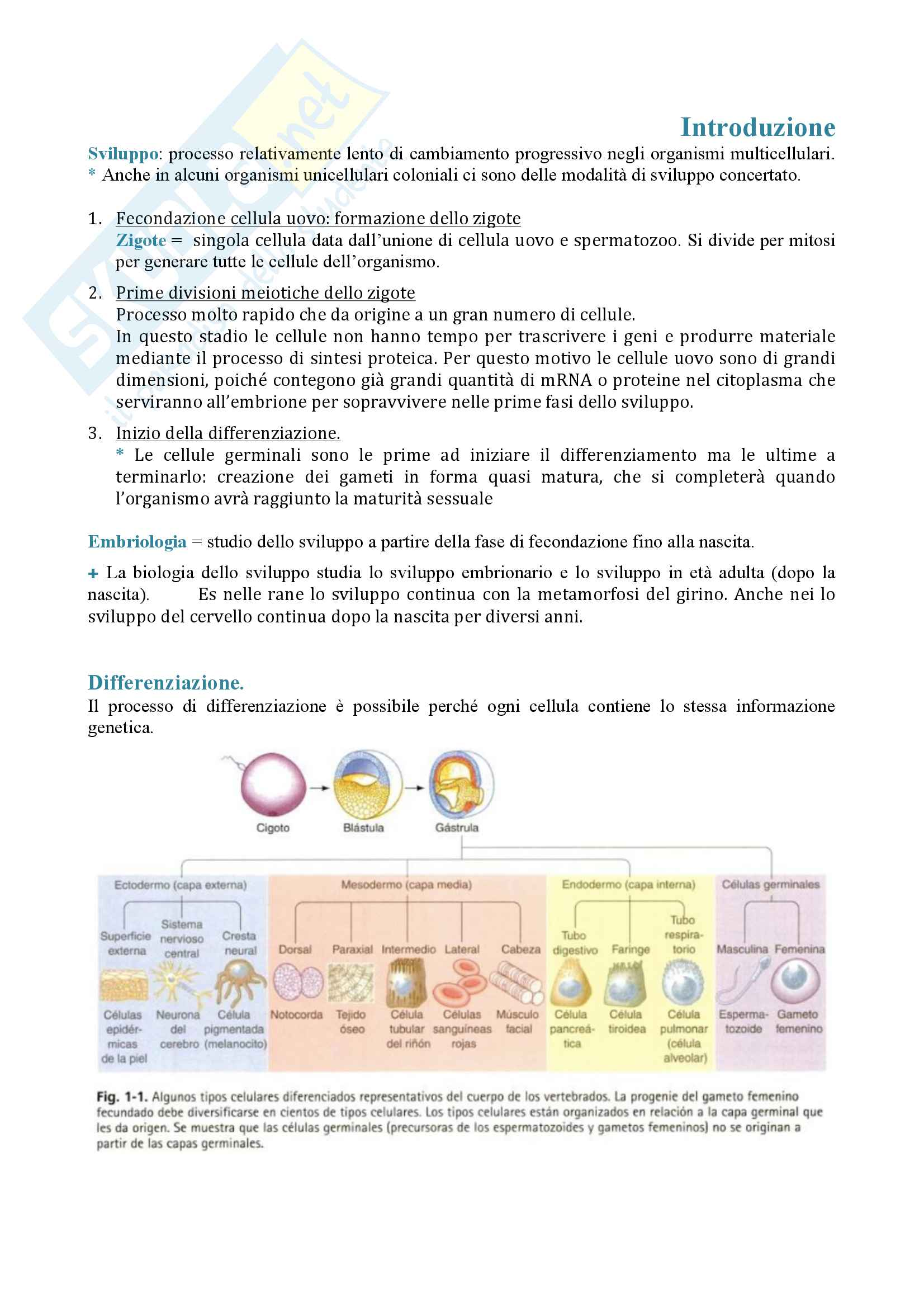 Appunti biologia dello sviluppo