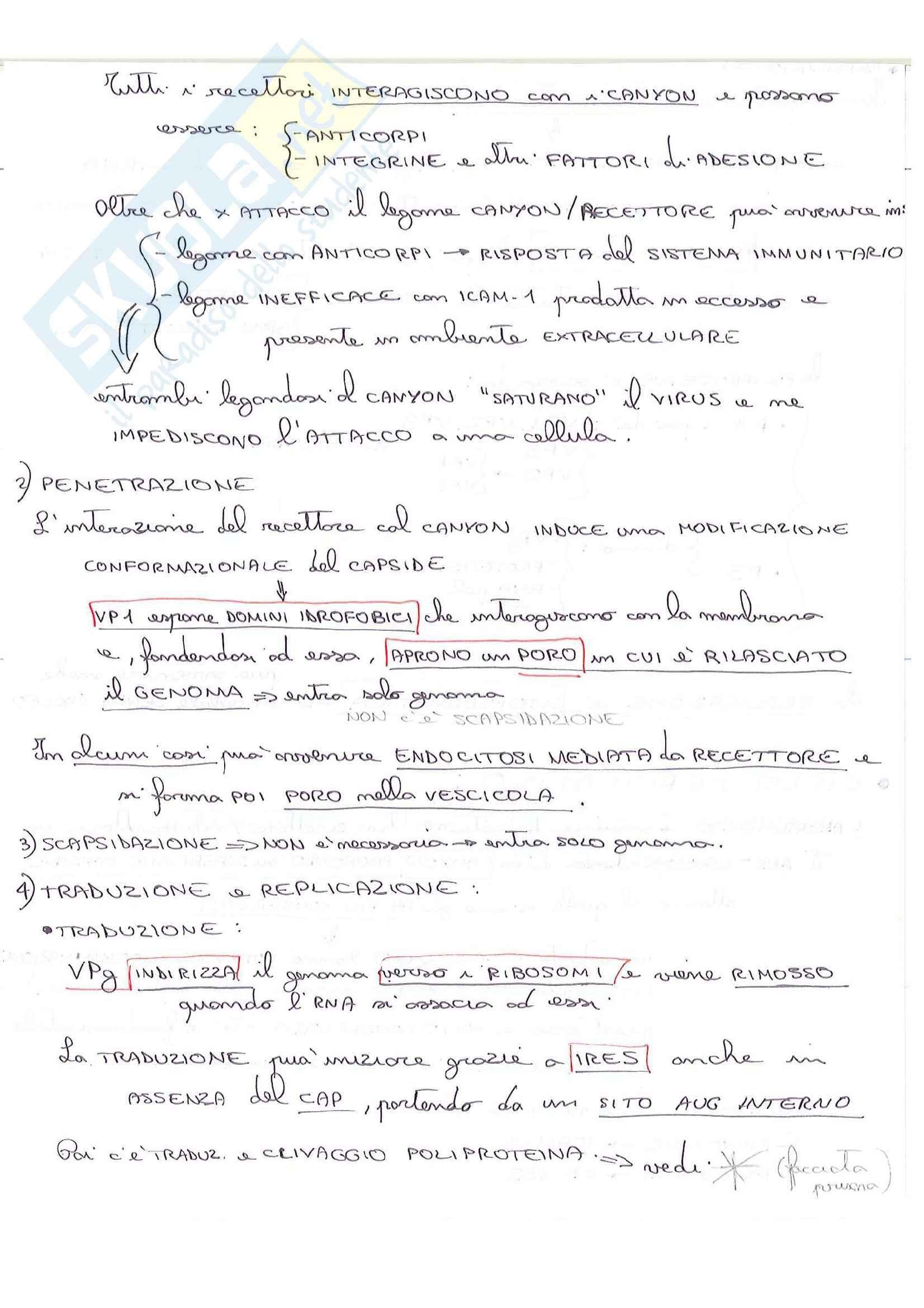 Lezioni, Microbiologia medica Pag. 26