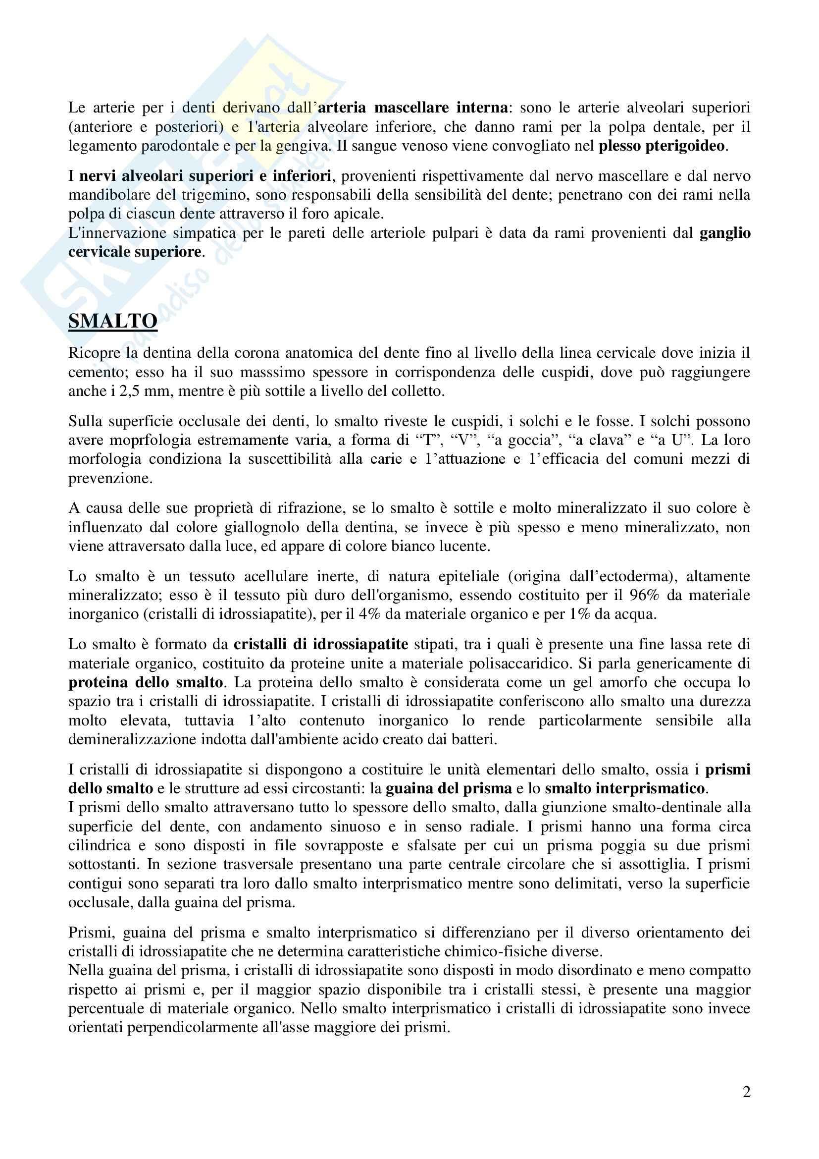 Denti, Anatomia dell'Apparato stomatognatico Pag. 2