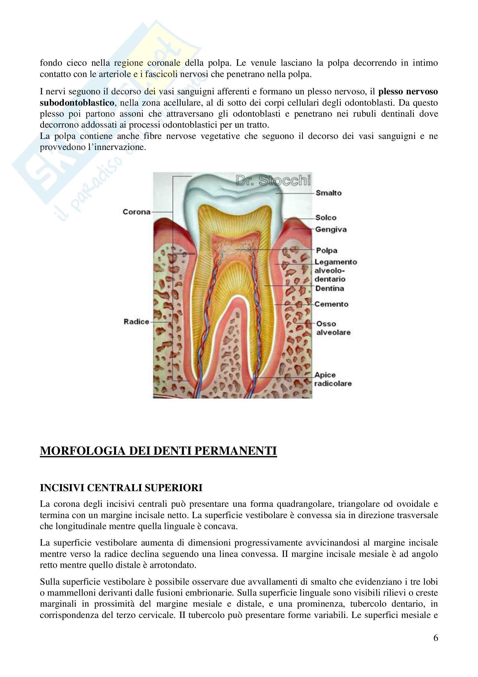 Denti, Anatomia dell'Apparato stomatognatico Pag. 6