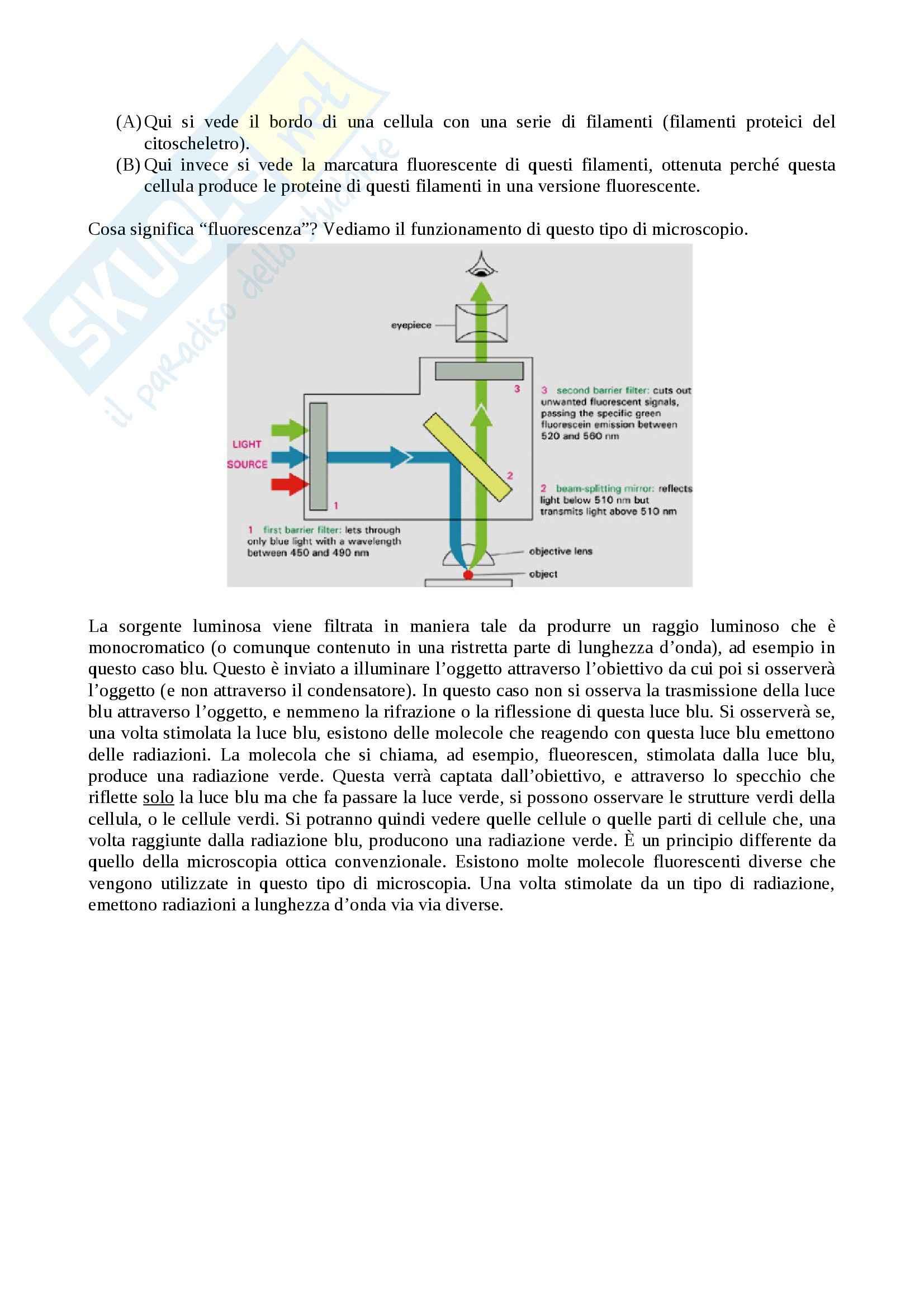 Citologia - microscopia Pag. 6