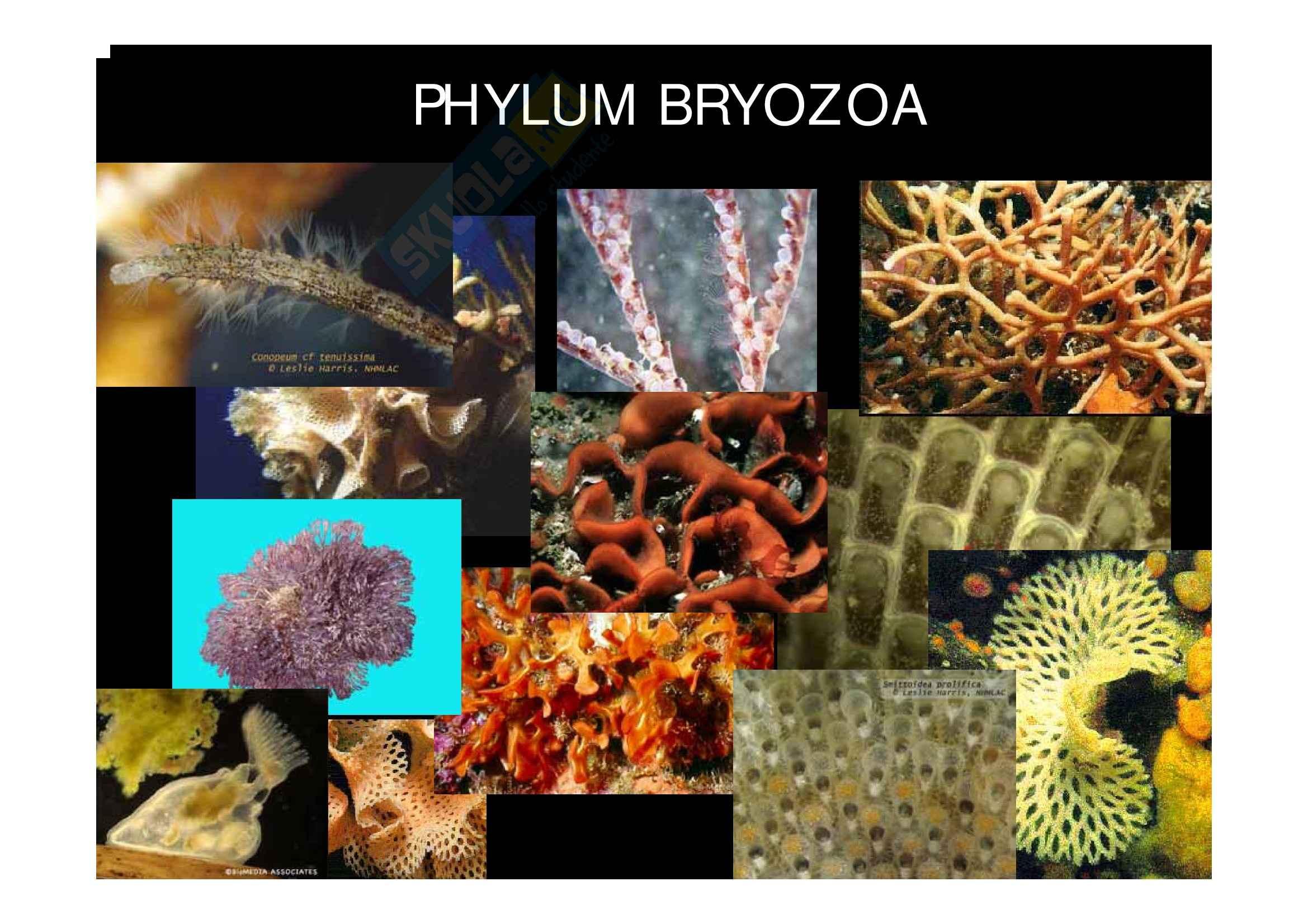 Zoologia - Briozoi