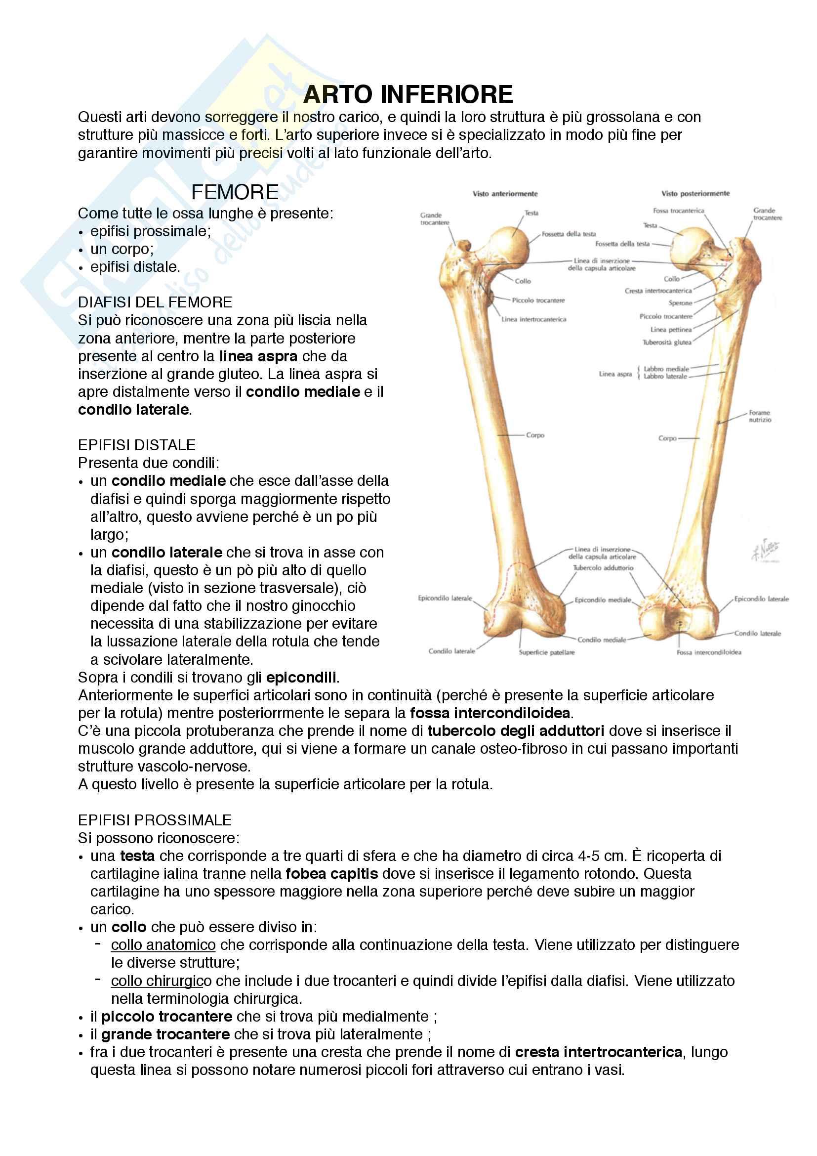 Documento completo per esame Anatomia I-Arto inferiore, UNIPD