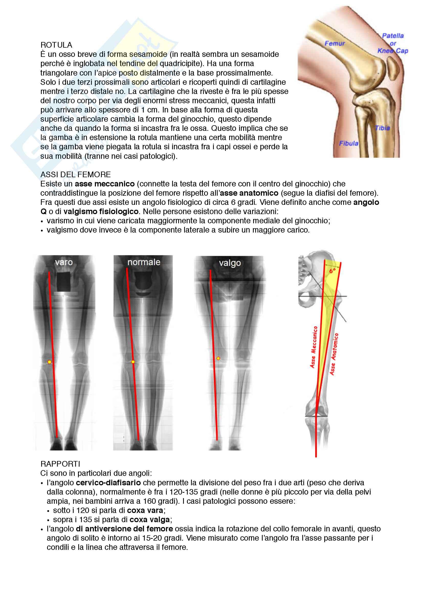 Documento completo per esame Anatomia I-Arto inferiore, UNIPD Pag. 2