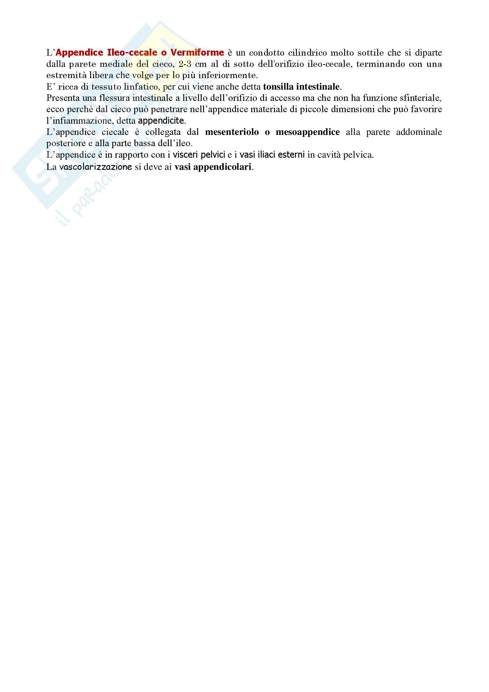 Anatomia umana - Appendice Ileo Cecale