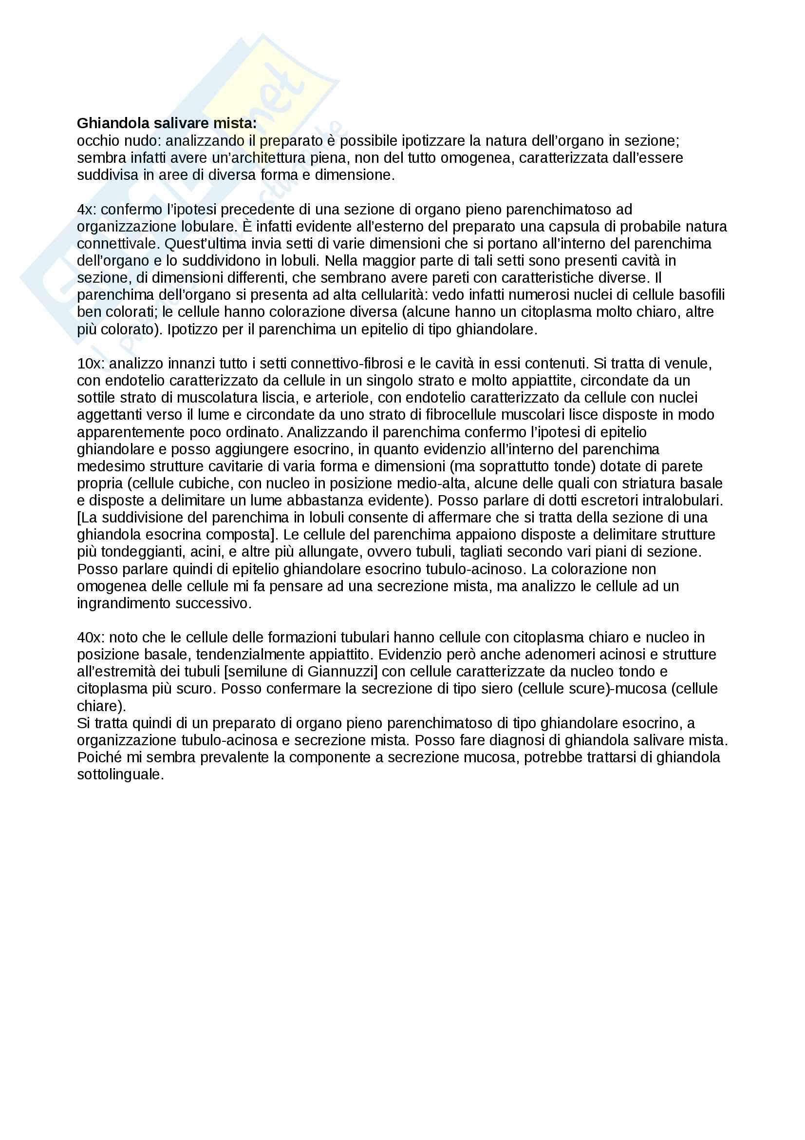 Anatomia microscopica - descrizione vetrini Pag. 6
