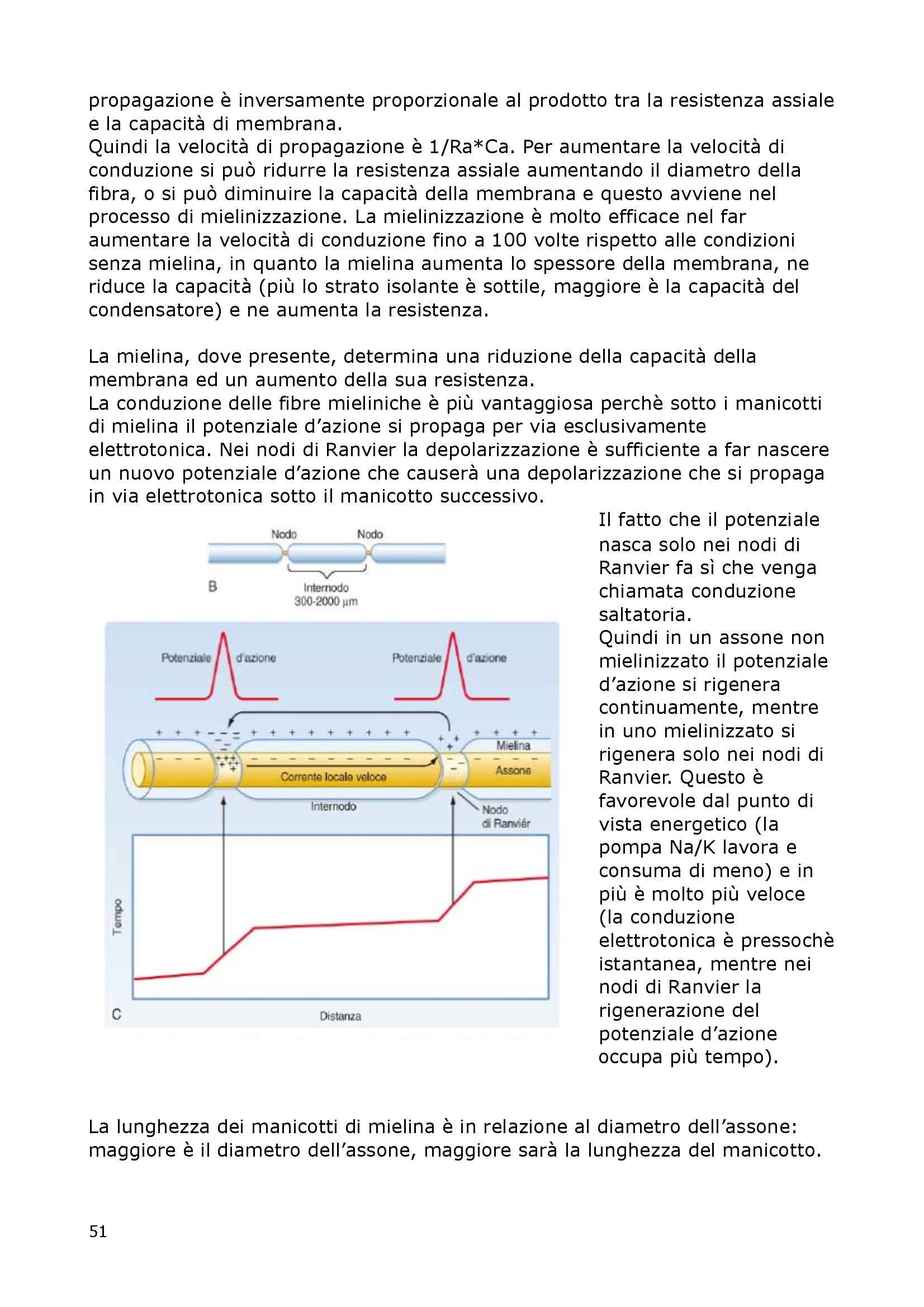 Fisiologia Del Neurone E Della Sinapsi - Fisiologia I Pag. 51