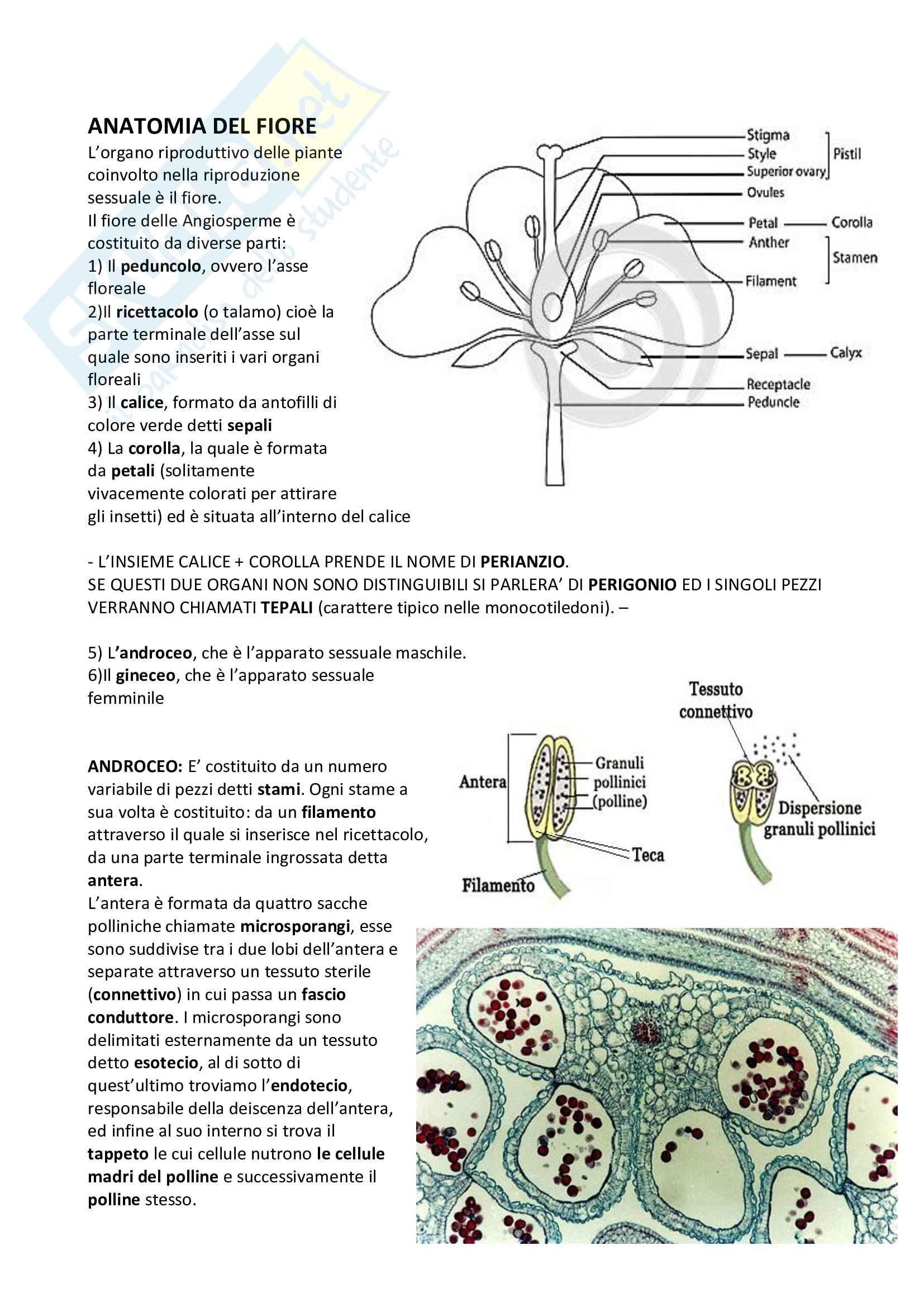 Descrizione dettagliata sul fiore