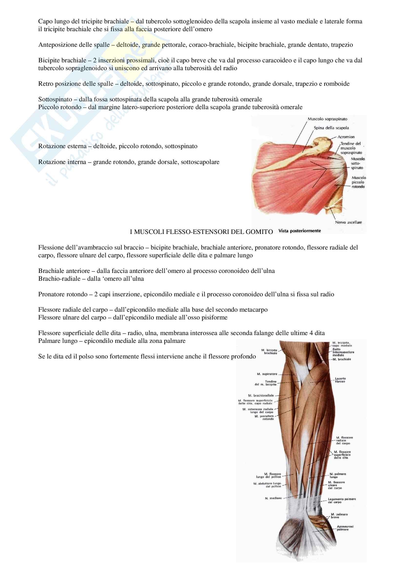 Anatomia: Muscoli seconda parte Pag. 6
