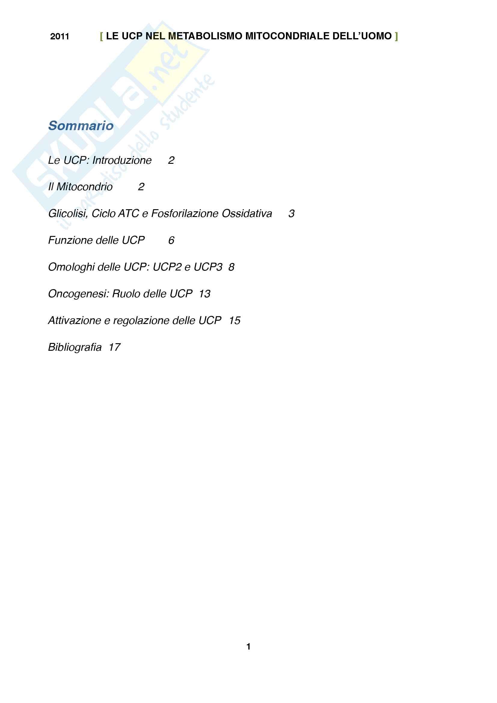 Tesina UCP: Proteine disaccoppianti mitocondriali Pag. 2